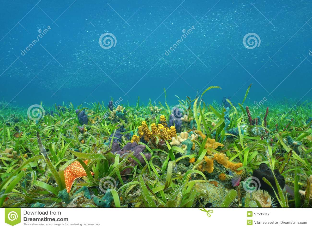 Ocean Floor With Sea Grass And Colorful Sponges