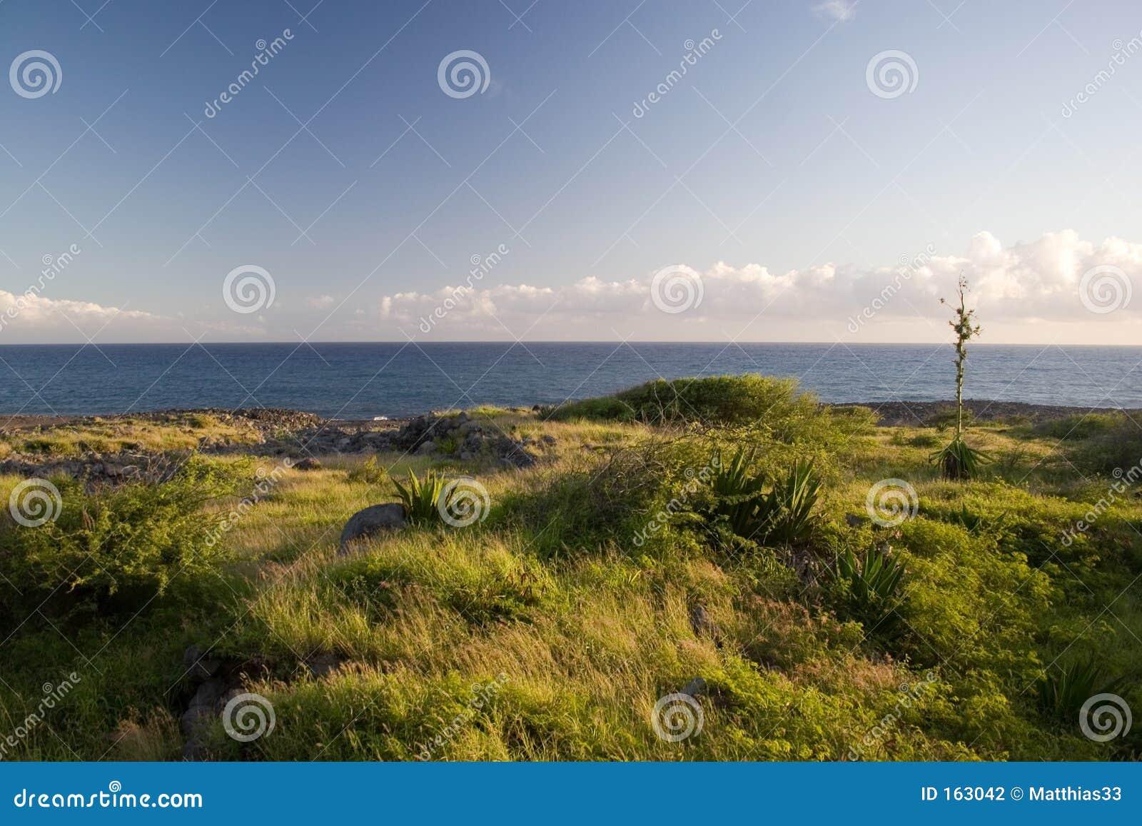Ocean greenery
