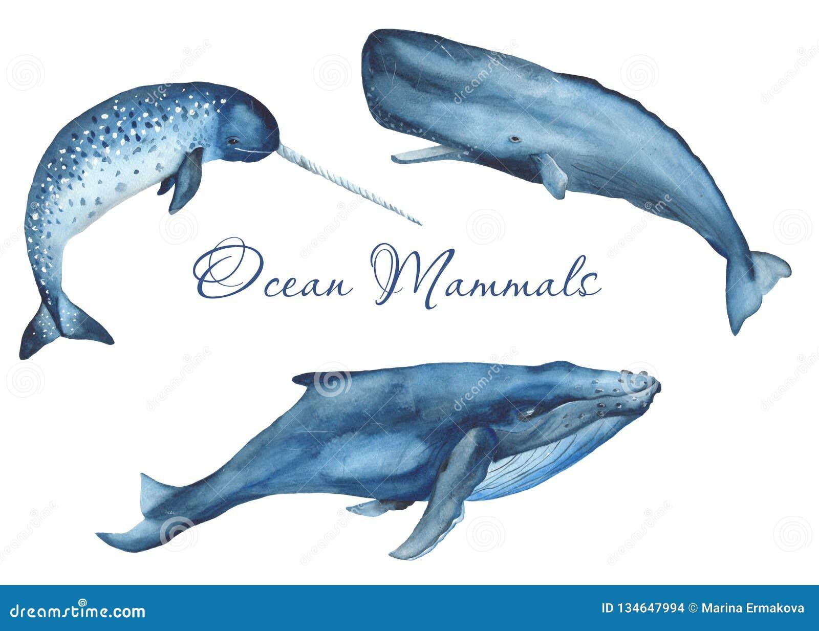 Ocean mammals watercolor.