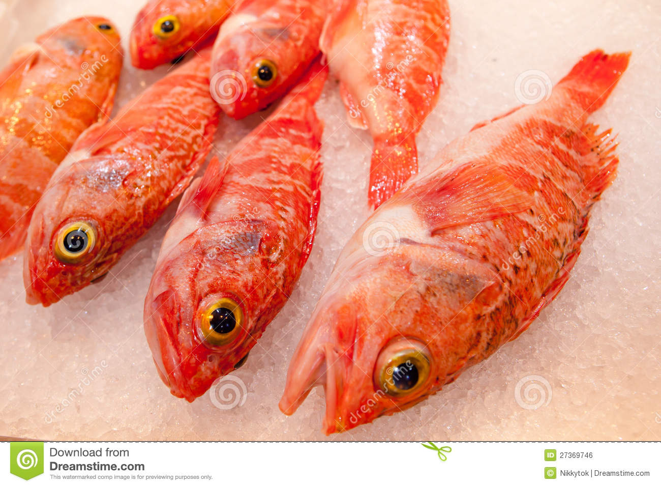 Ocean perch royalty free stock image image 27369746 for Ocean perch fish