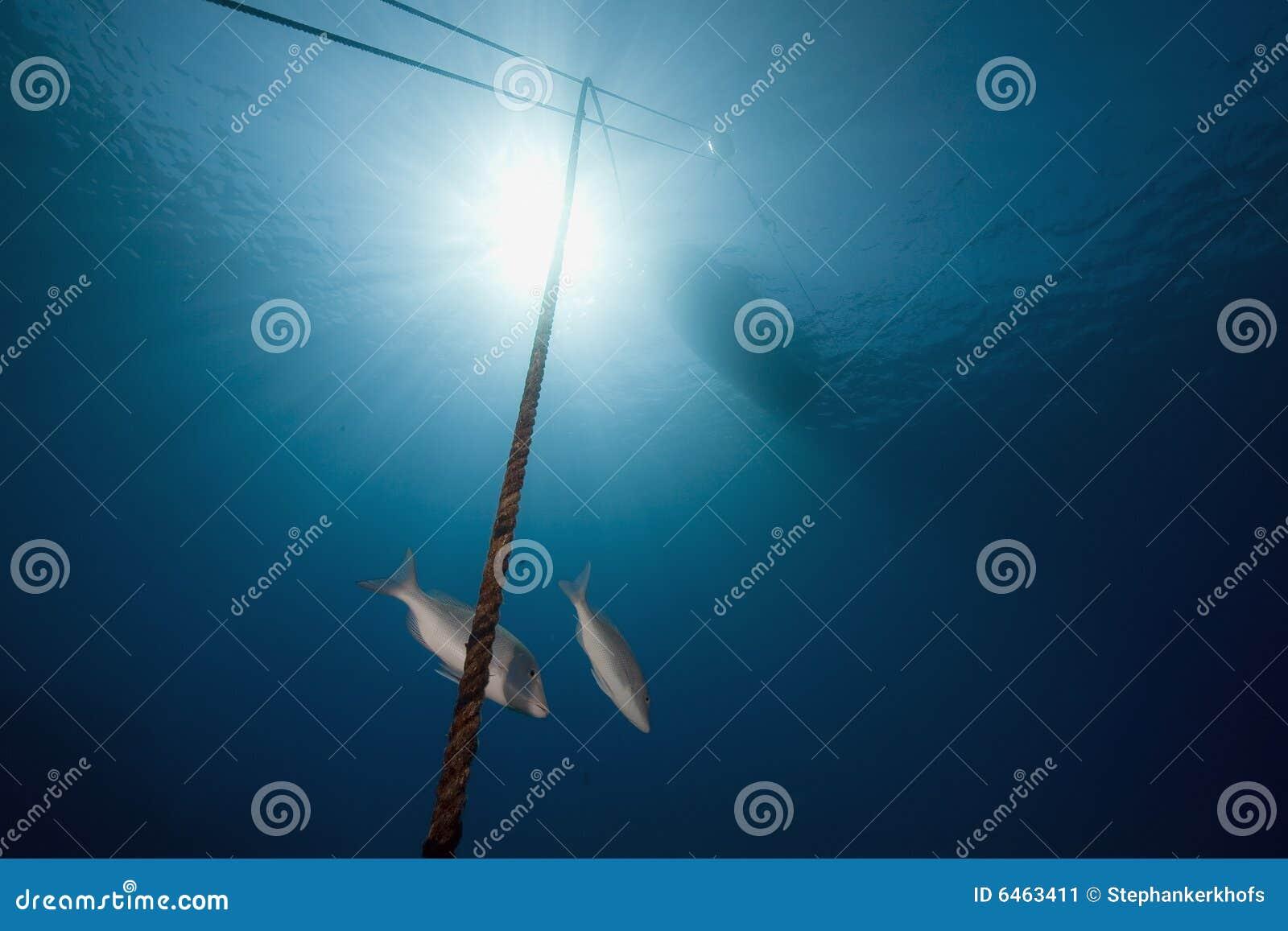 Ocean ryb