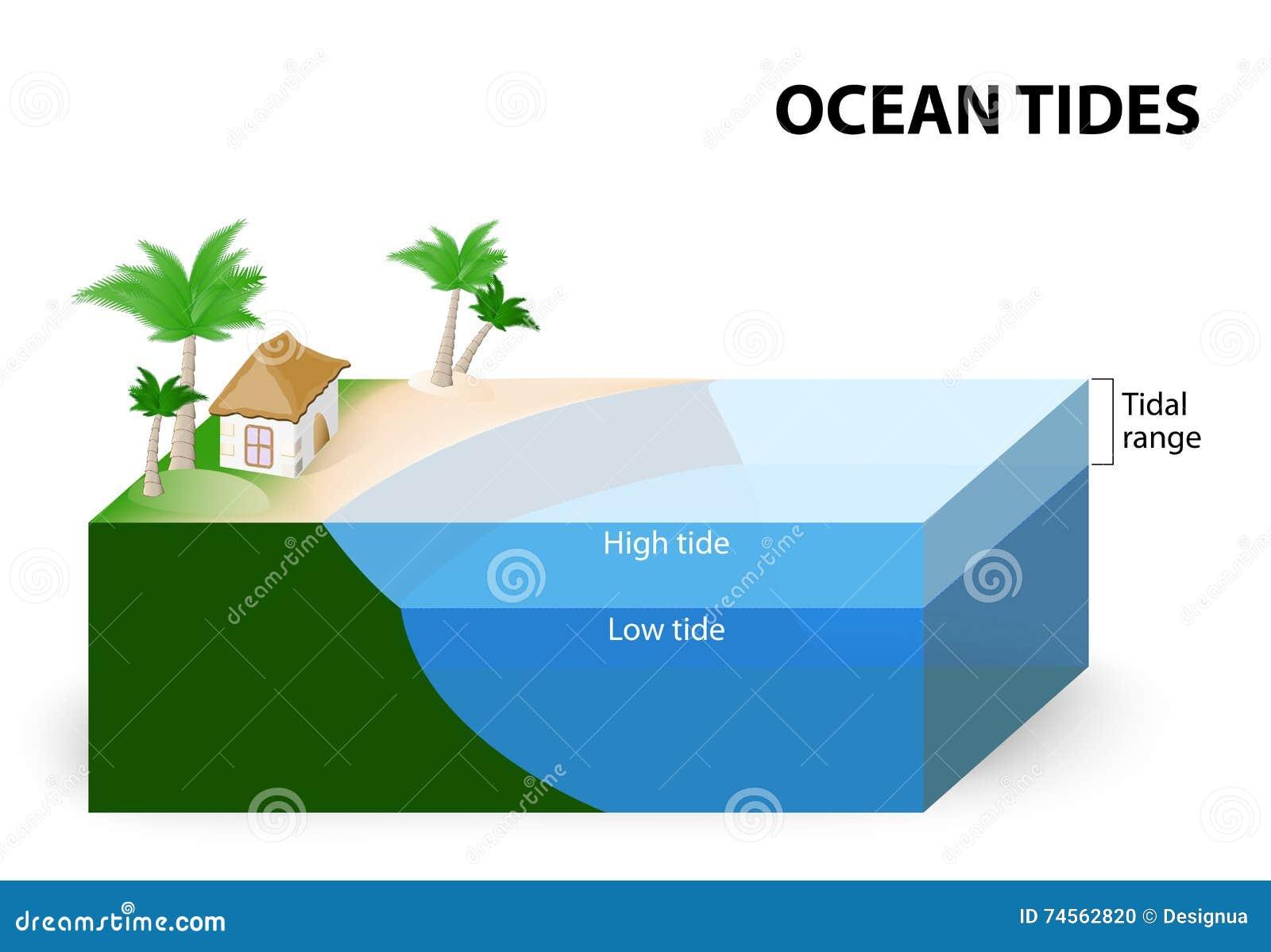 archery range diagram tidal range diagram ocean tides stock vector - image: 74562820