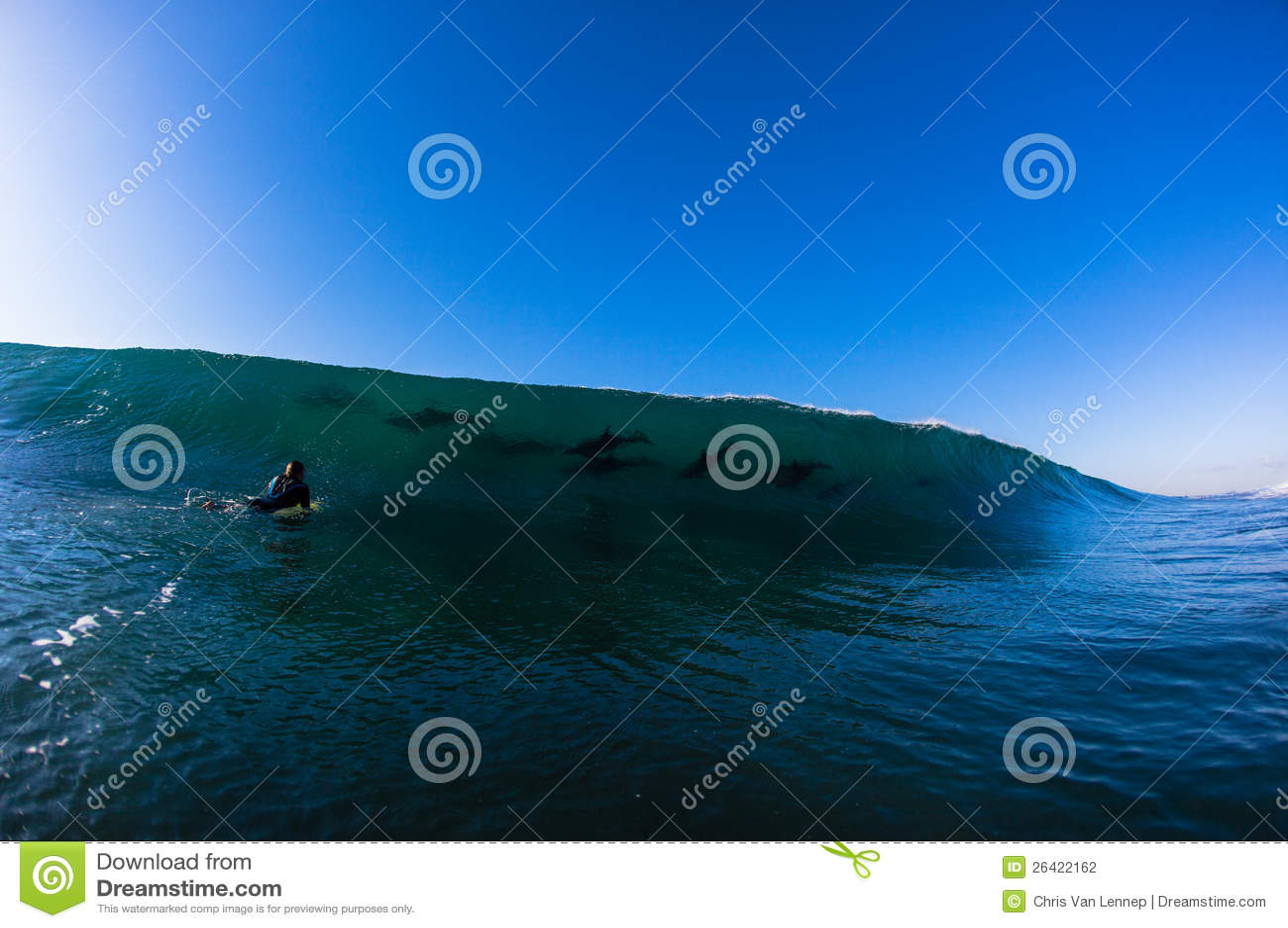 Ocean Wave Dolphins Surfer