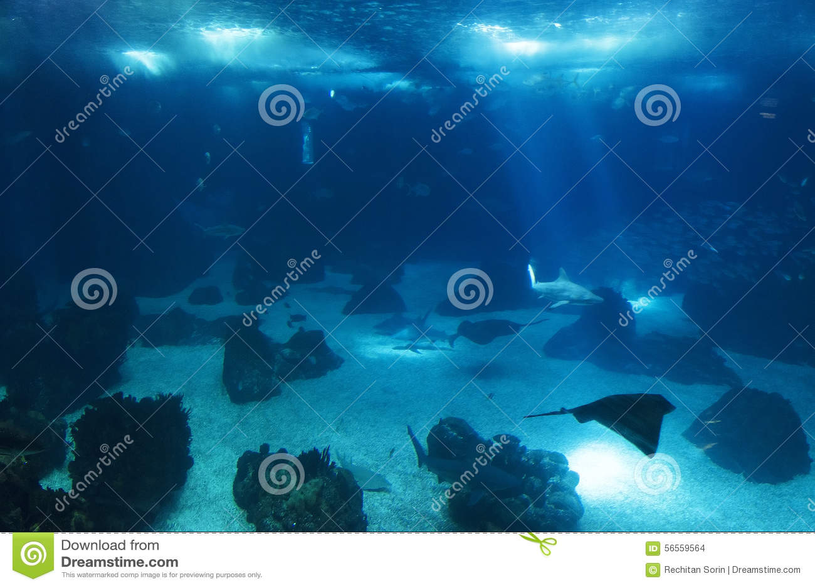 Download Oceanarium της Λισσαβώνας στοκ εικόνες. εικόνα από engineering - 56559564