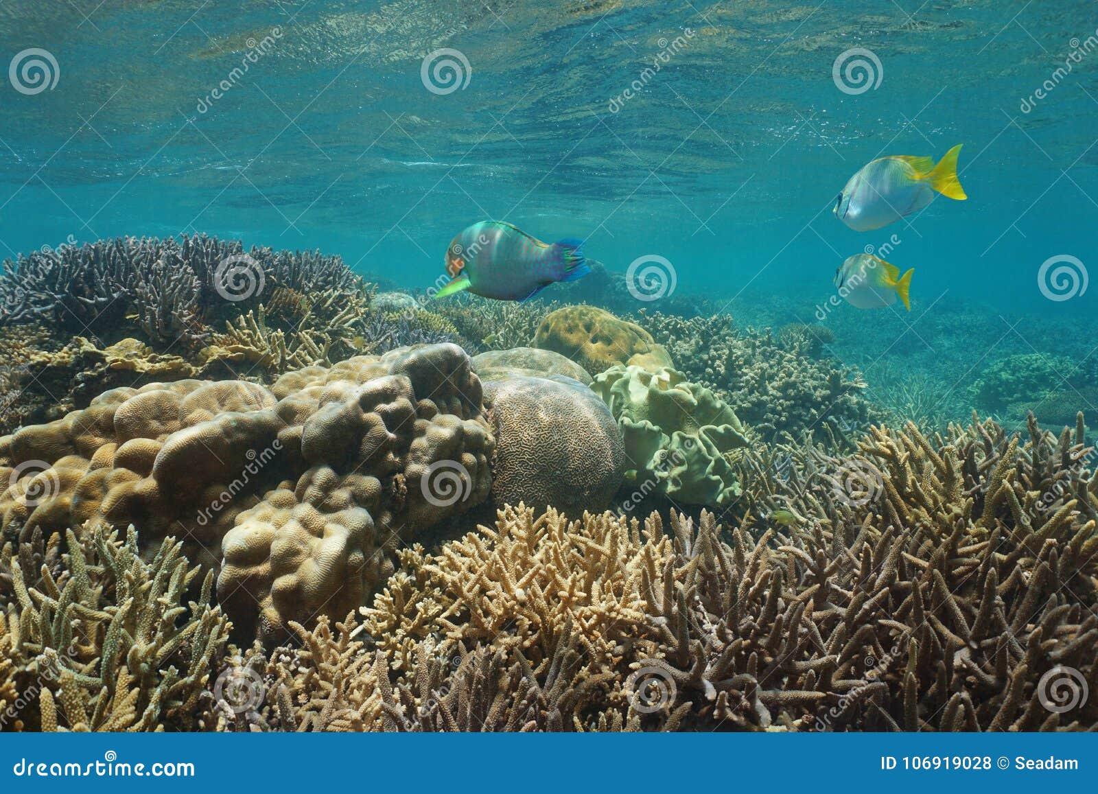 Oceania Caledonia rafy koralowa Nowa podwodna ryba