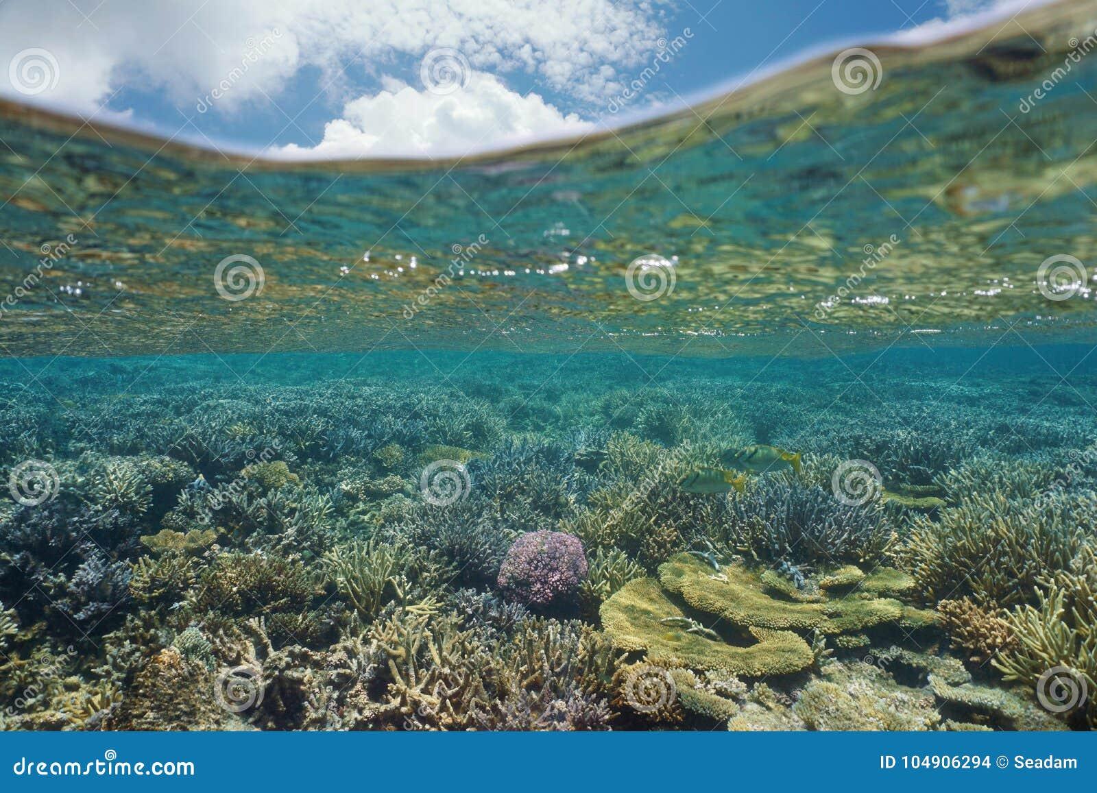 Oceano Pacifico subacqueo Oceania della barriera corallina