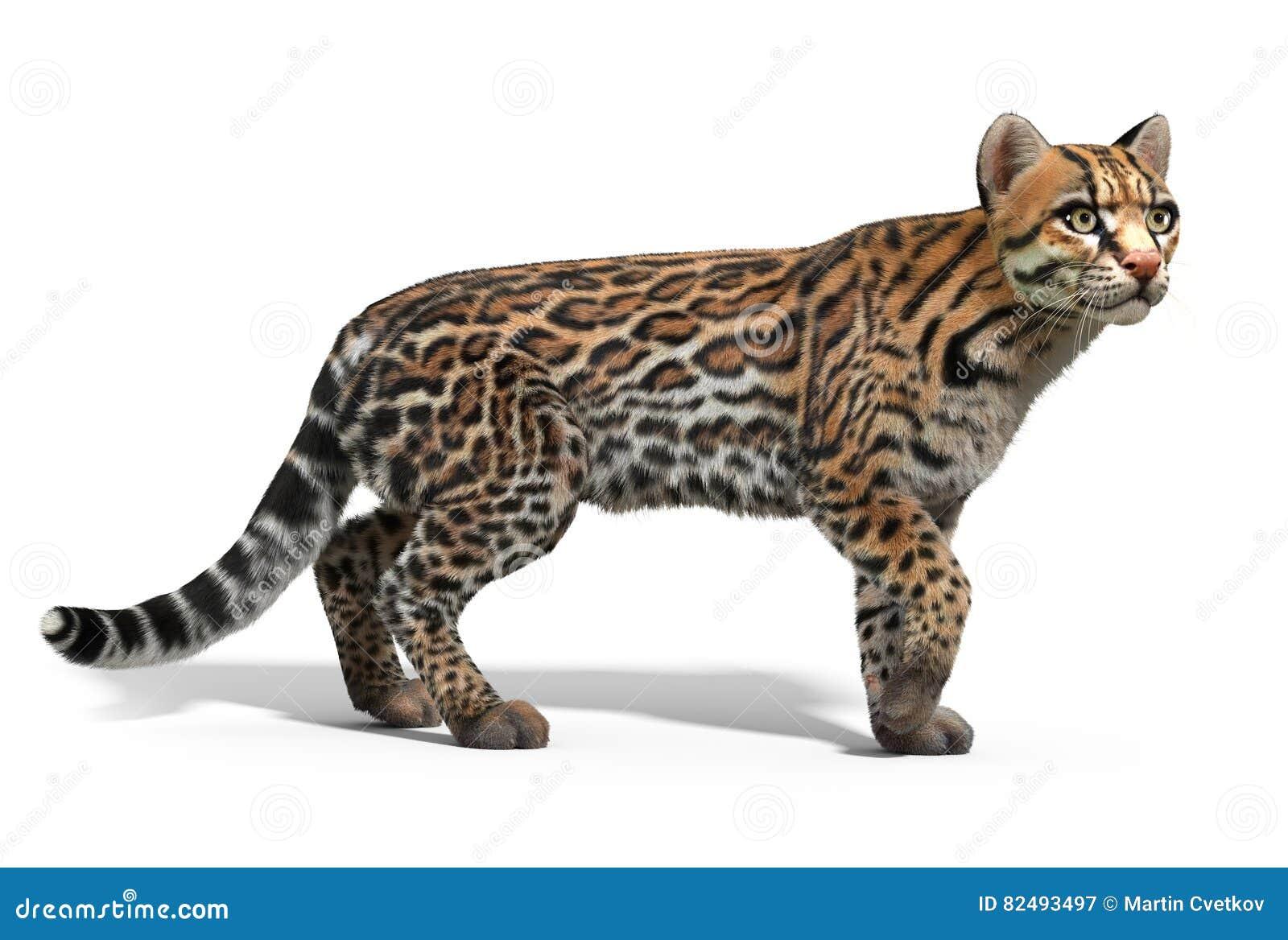 Ocelot Kot Ilustracji Ilustracja Złożonej Z Puma Rendered 82493497