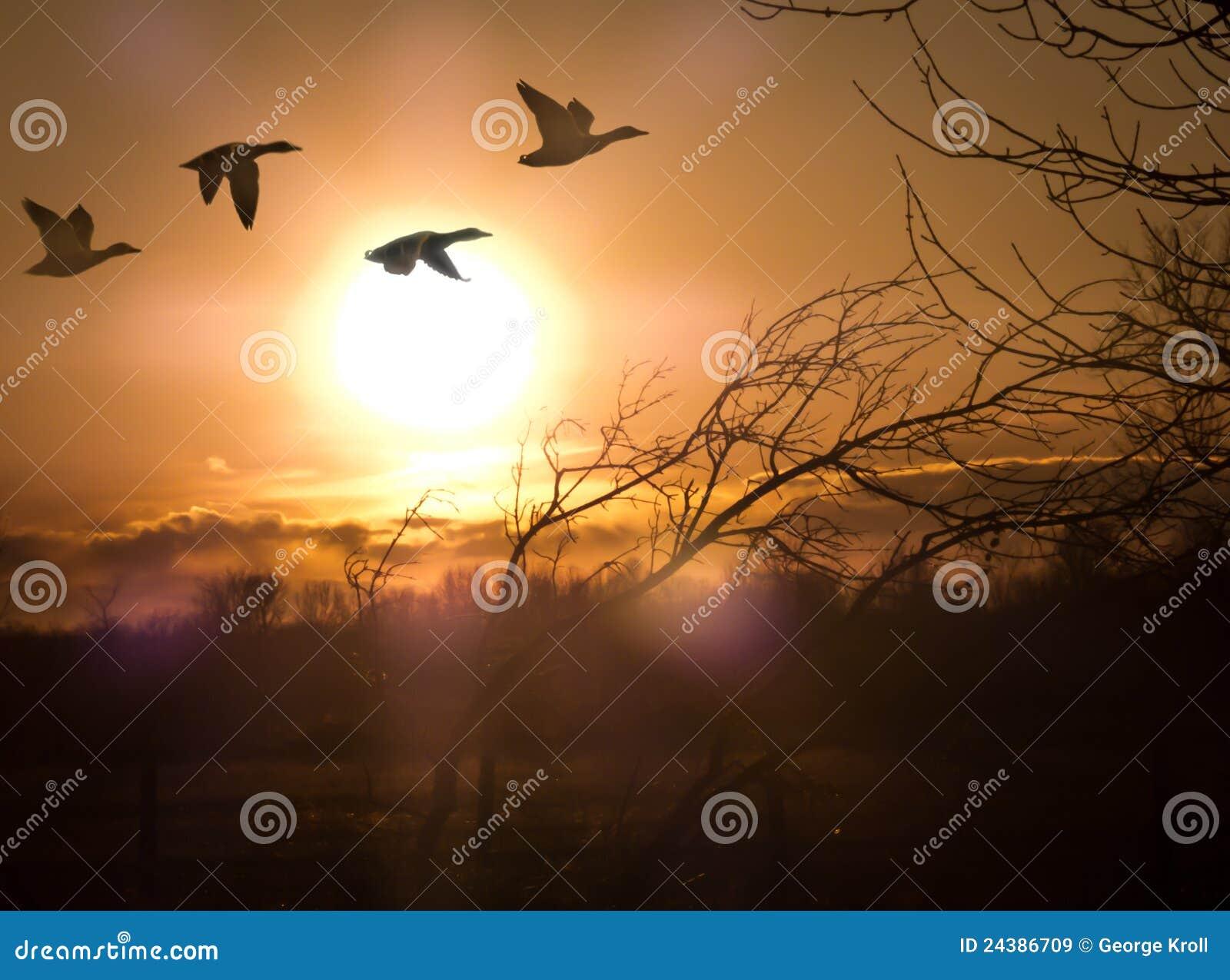 Oche al tramonto