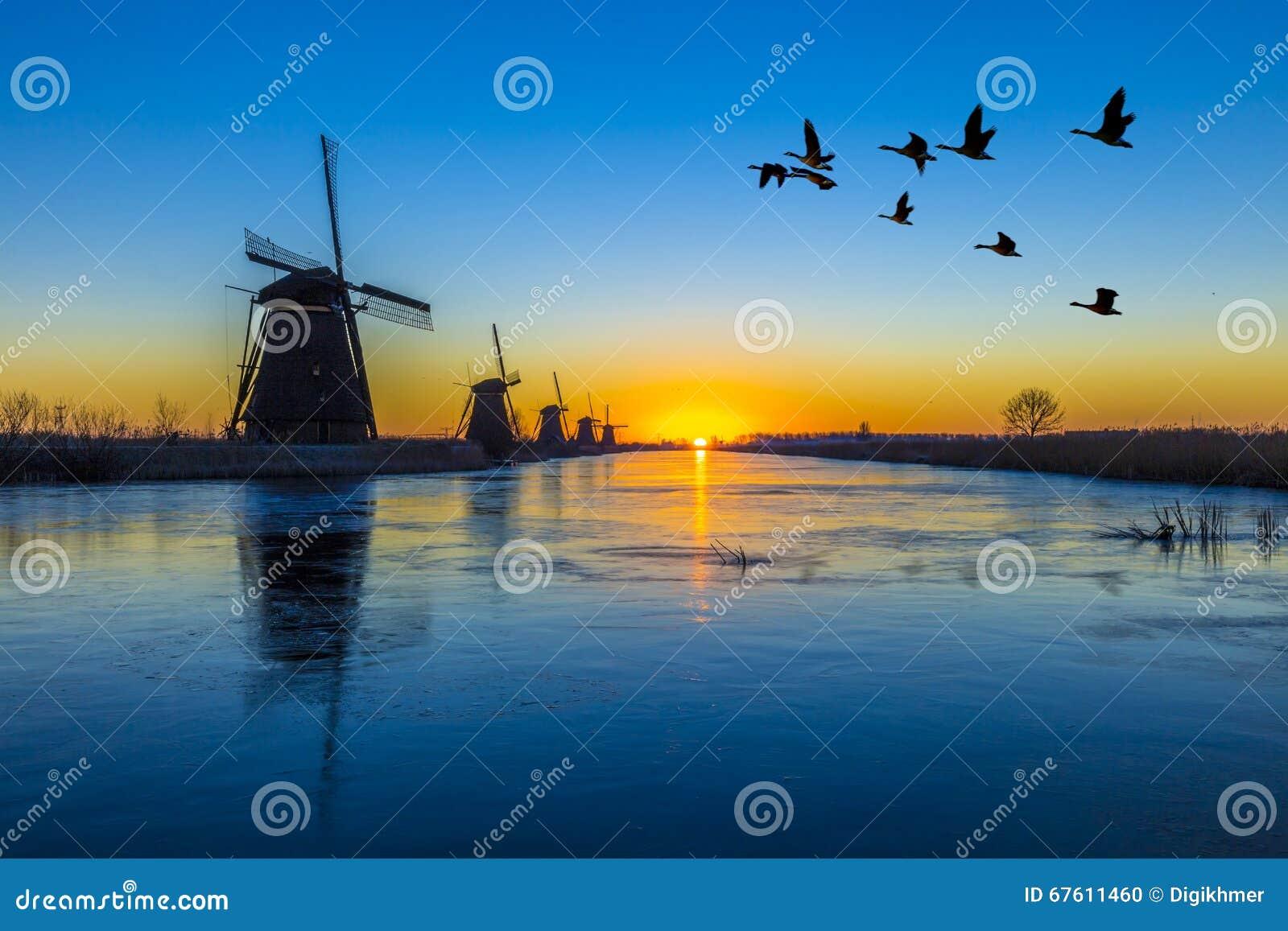 Oche che sorvolano alba sull allineamento congelato dei mulini a vento