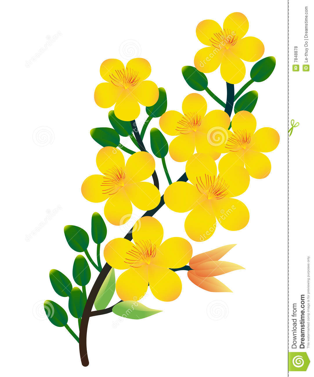 Ochna Integerrima stock illustration. Illustration of ...