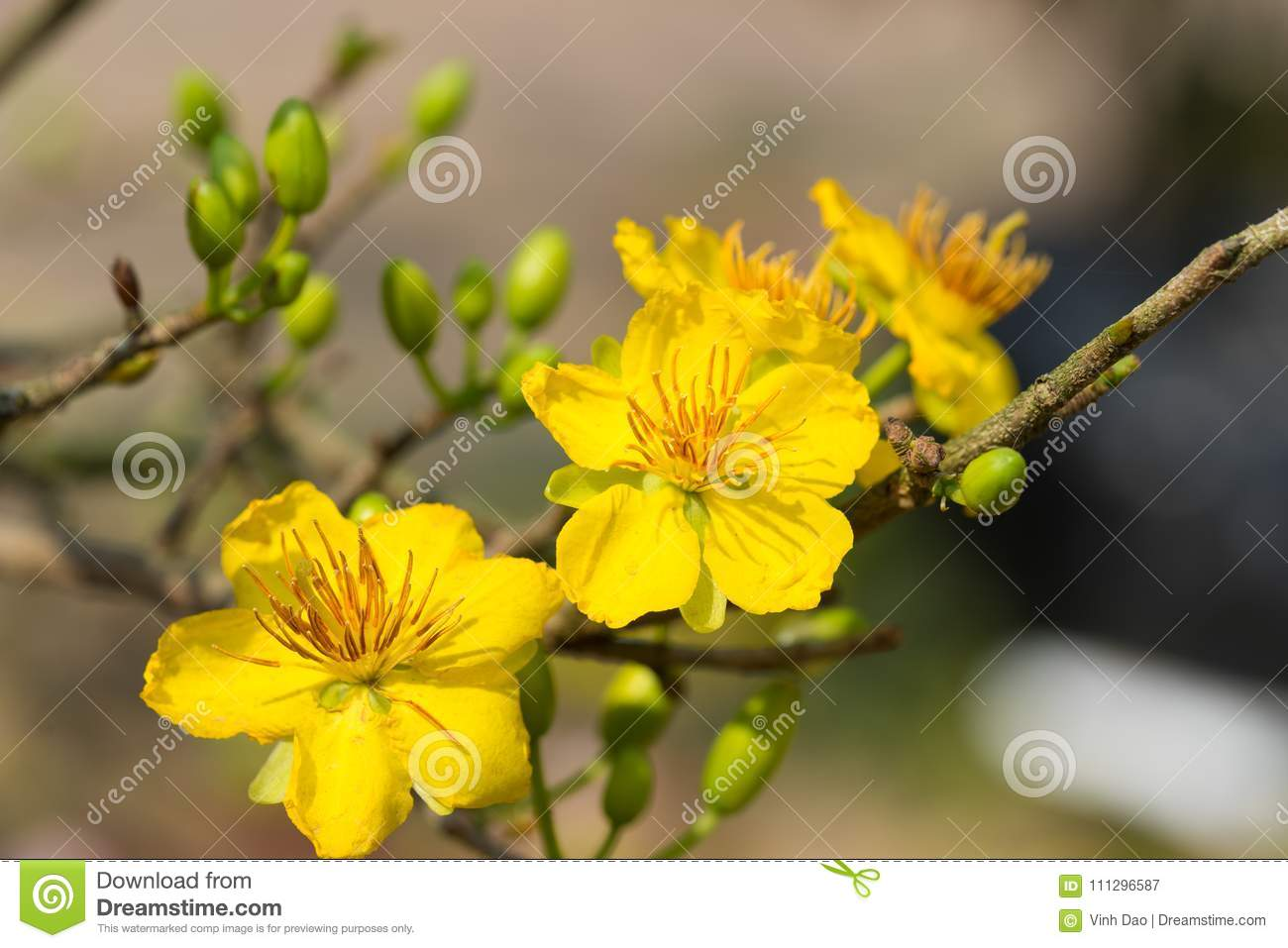 Yellow flower means image collections flower decoration ideas yellow flower means choice image flower decoration ideas yellow flower means choice image flower decoration ideas mightylinksfo Images