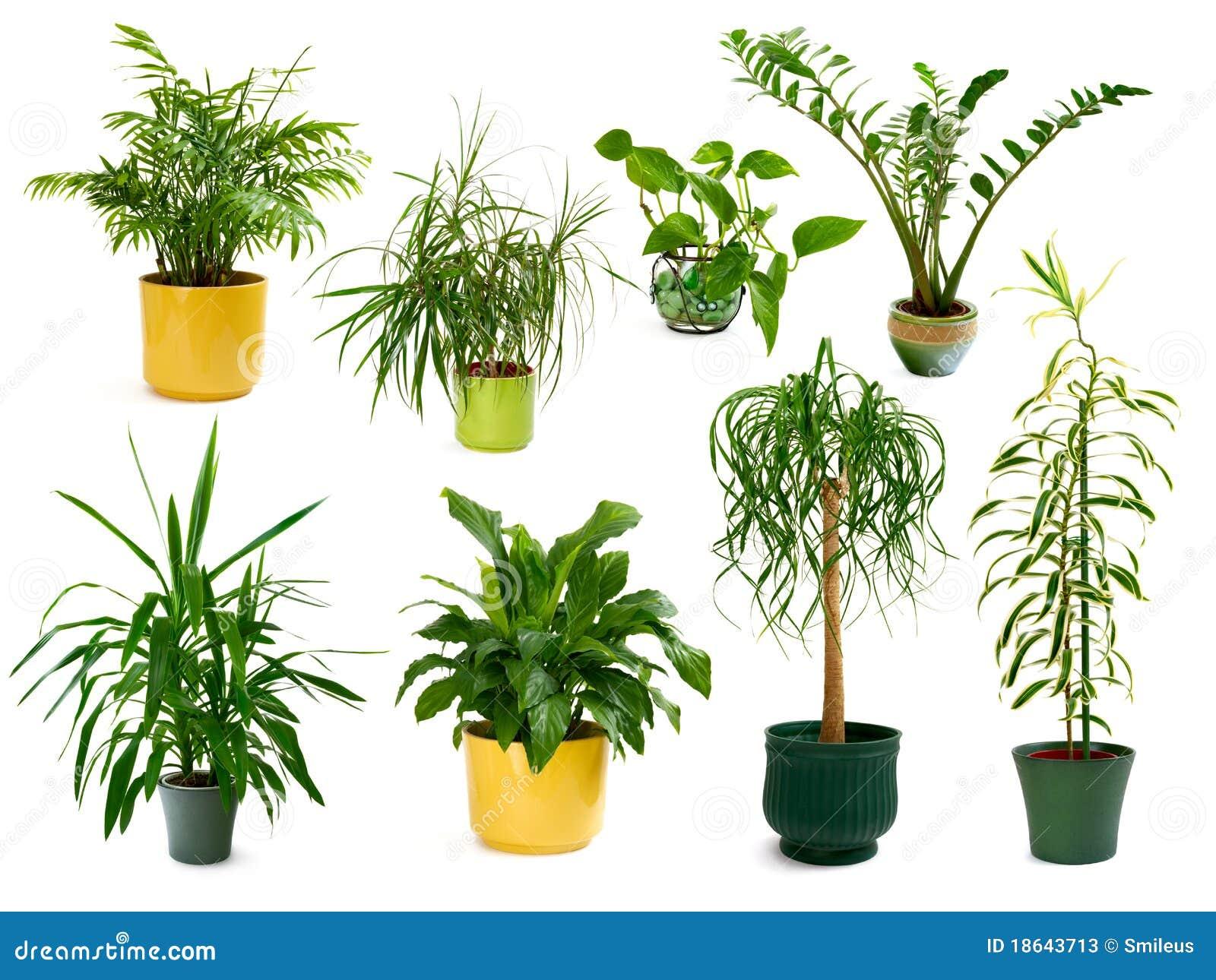 Ocho diversas plantas de interior en un conjunto fotos de for Fotos de plantas de interior