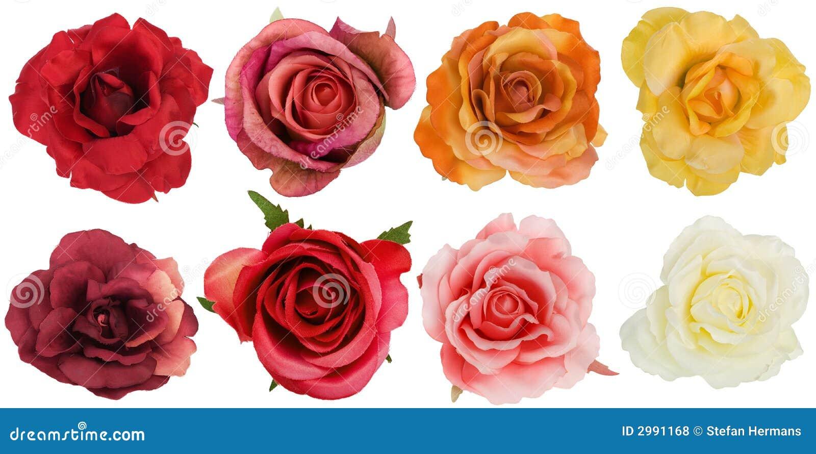 Ocho rosas vistas de arriba