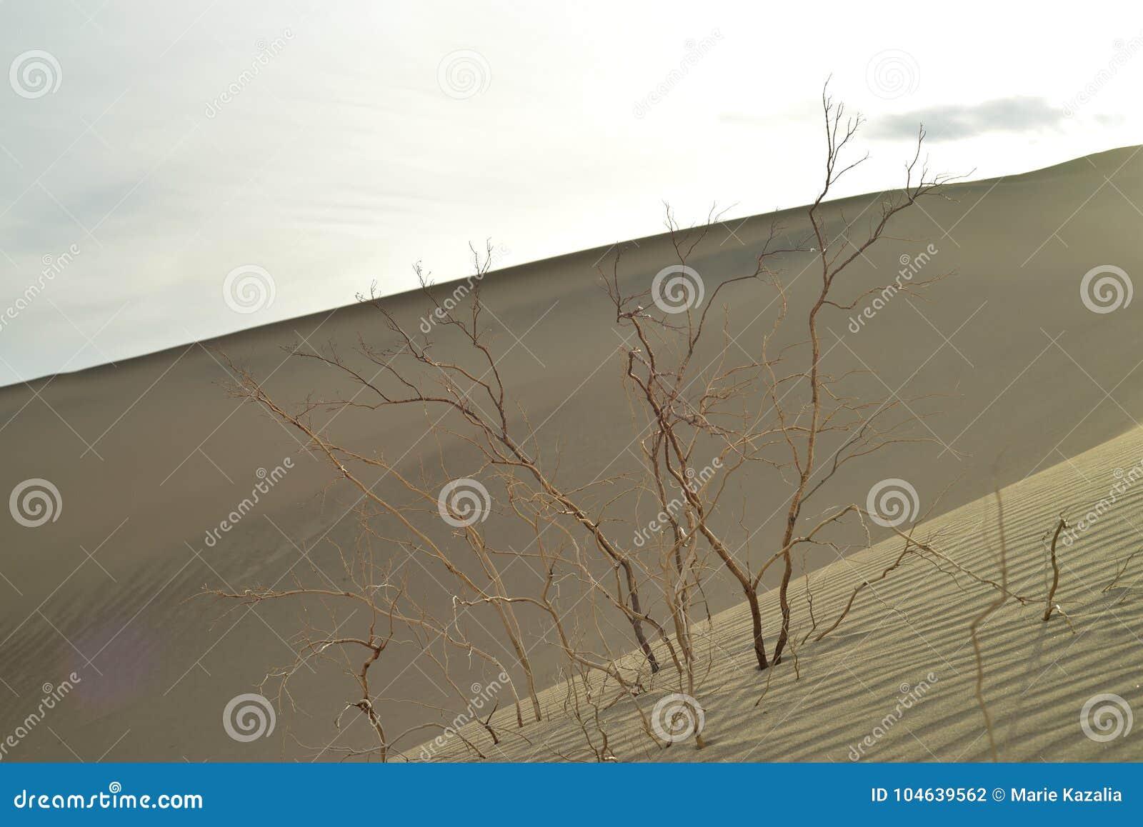Download Ochtend In Mesquite-de Doodsvallei Van Zandduinen Stock Foto - Afbeelding bestaande uit zonsopgang, bergen: 104639562