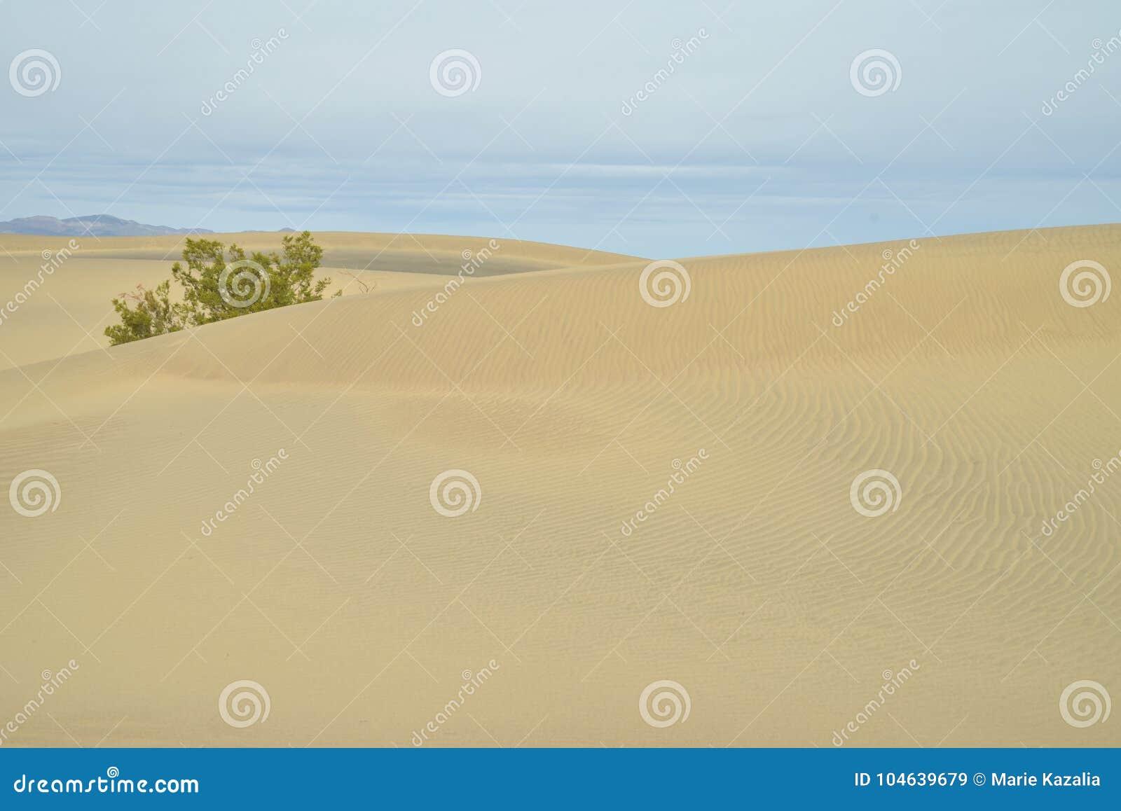 Download Ochtend In Mesquite-de Doodsvallei Van Zandduinen Stock Afbeelding - Afbeelding bestaande uit kleurrijk, woestijn: 104639679
