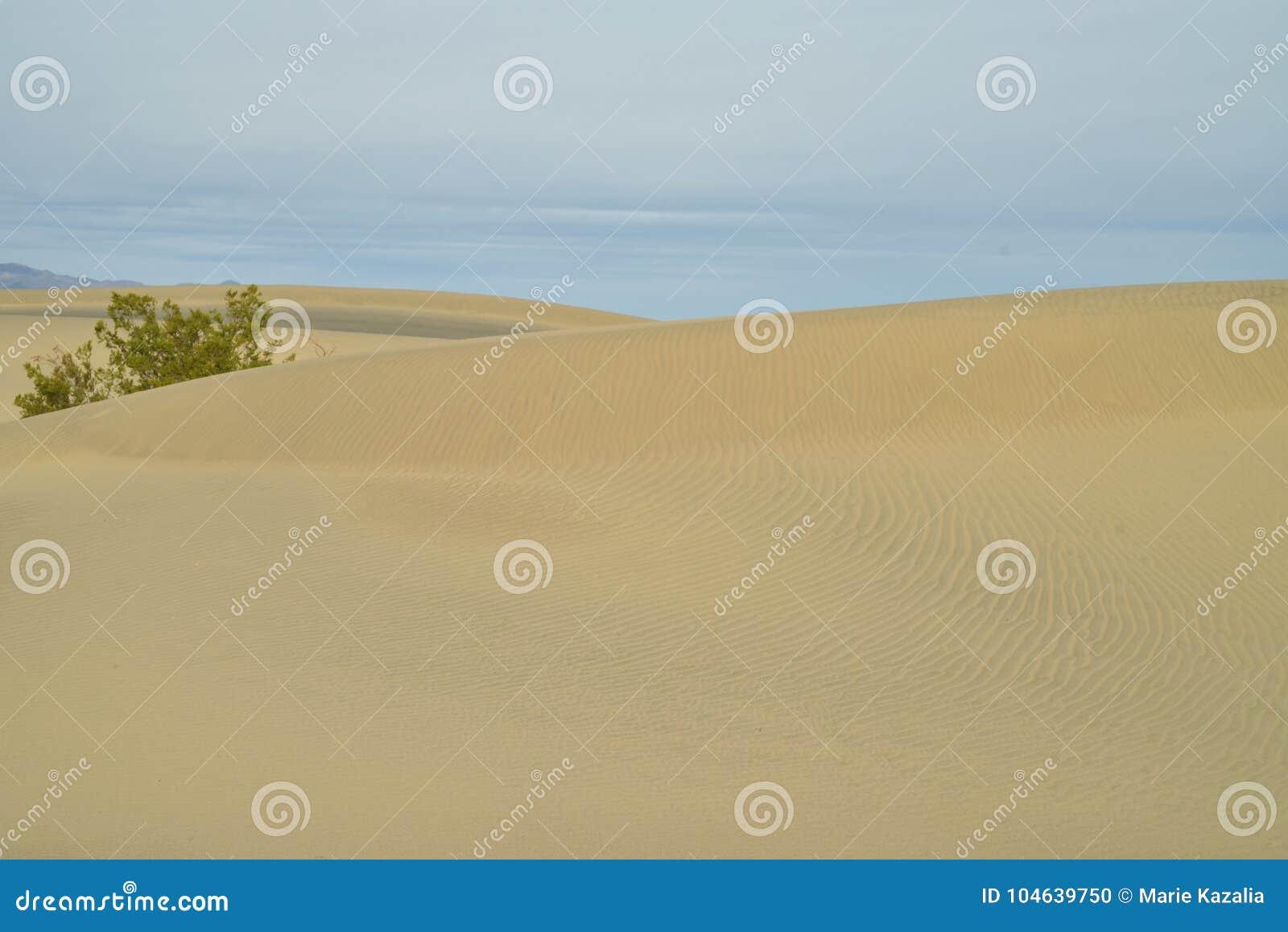 Download Ochtend In Mesquite-de Doodsvallei Van Zandduinen Stock Foto - Afbeelding bestaande uit zonsopgang, groot: 104639750