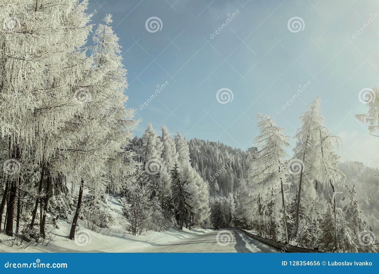 Ochtend op de winter bosdieweg, bomen aan de kant door zon wordt aangestoken, cov