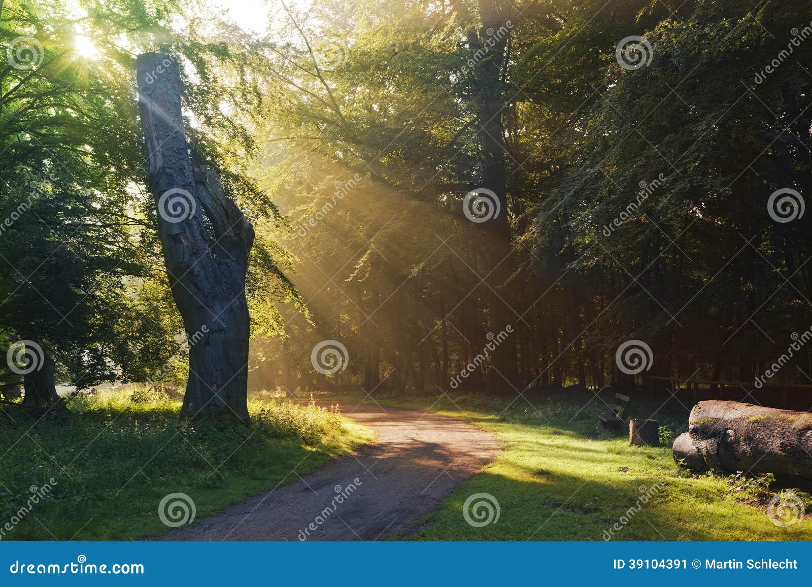 Ochtendboom