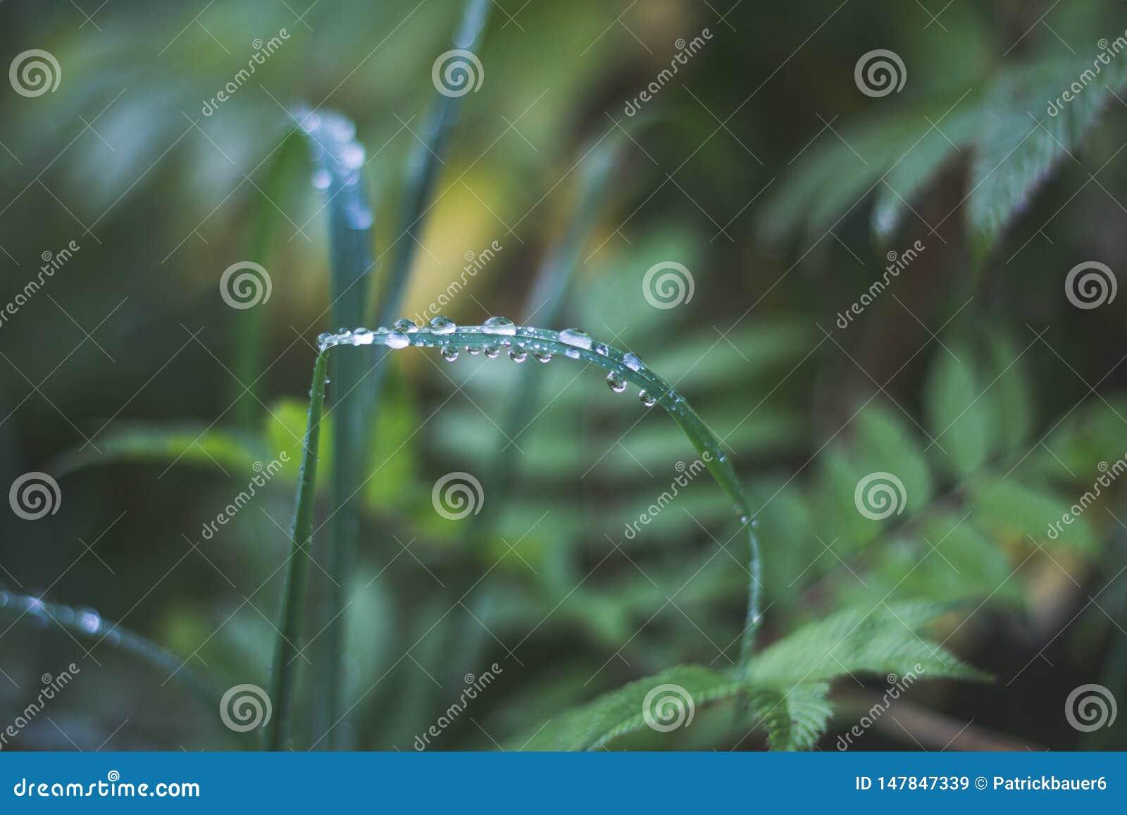 Ochtenddauw op een grassprietje