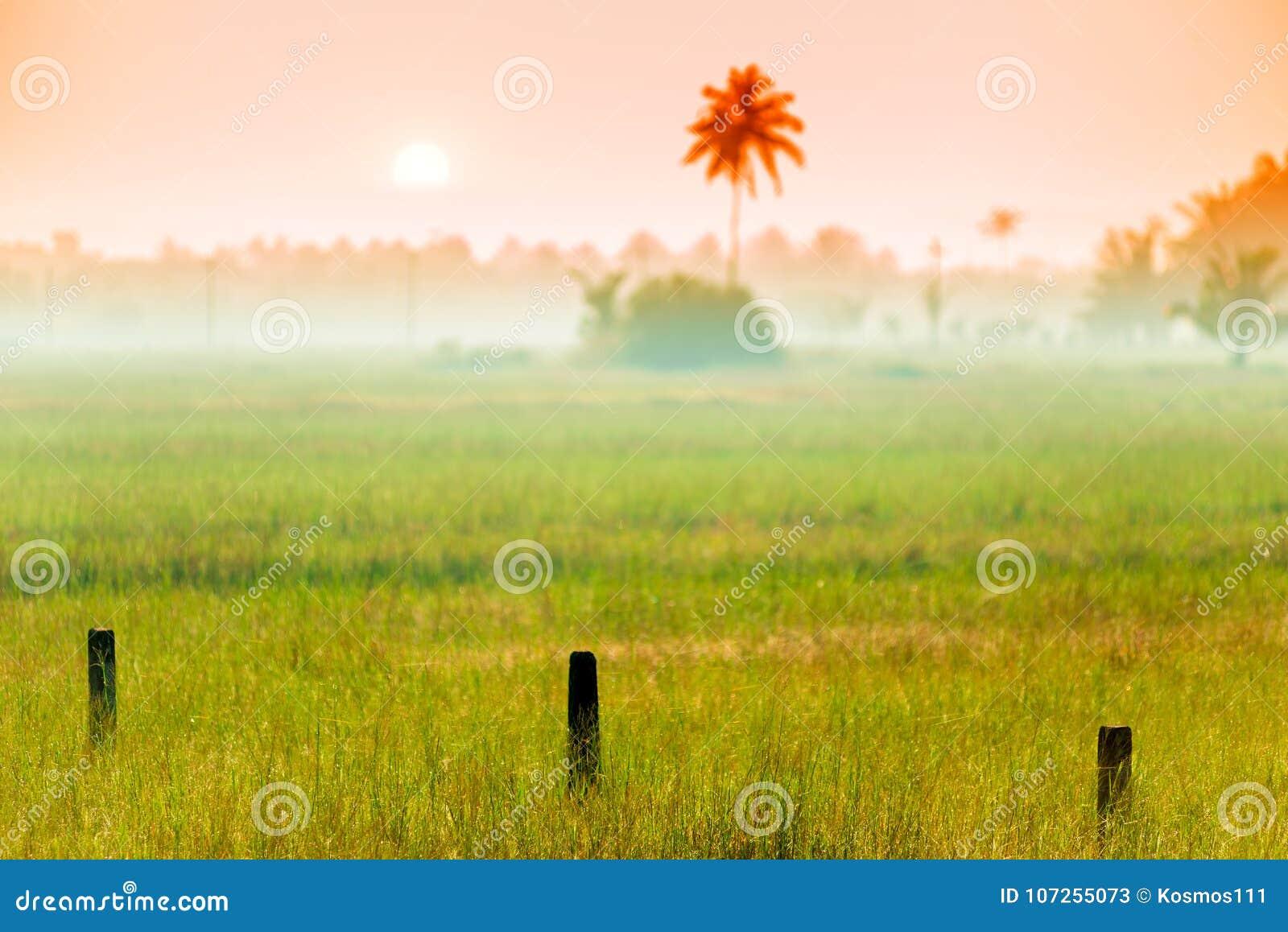 Ochtendmist op het gebied in een tropisch klimaat