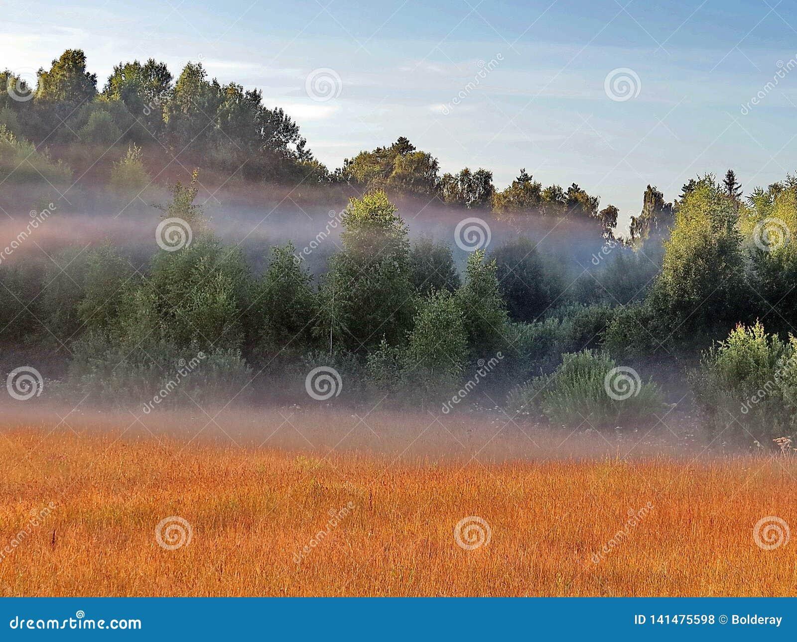 Ochtendmist over de bosweide Vroege ochtend