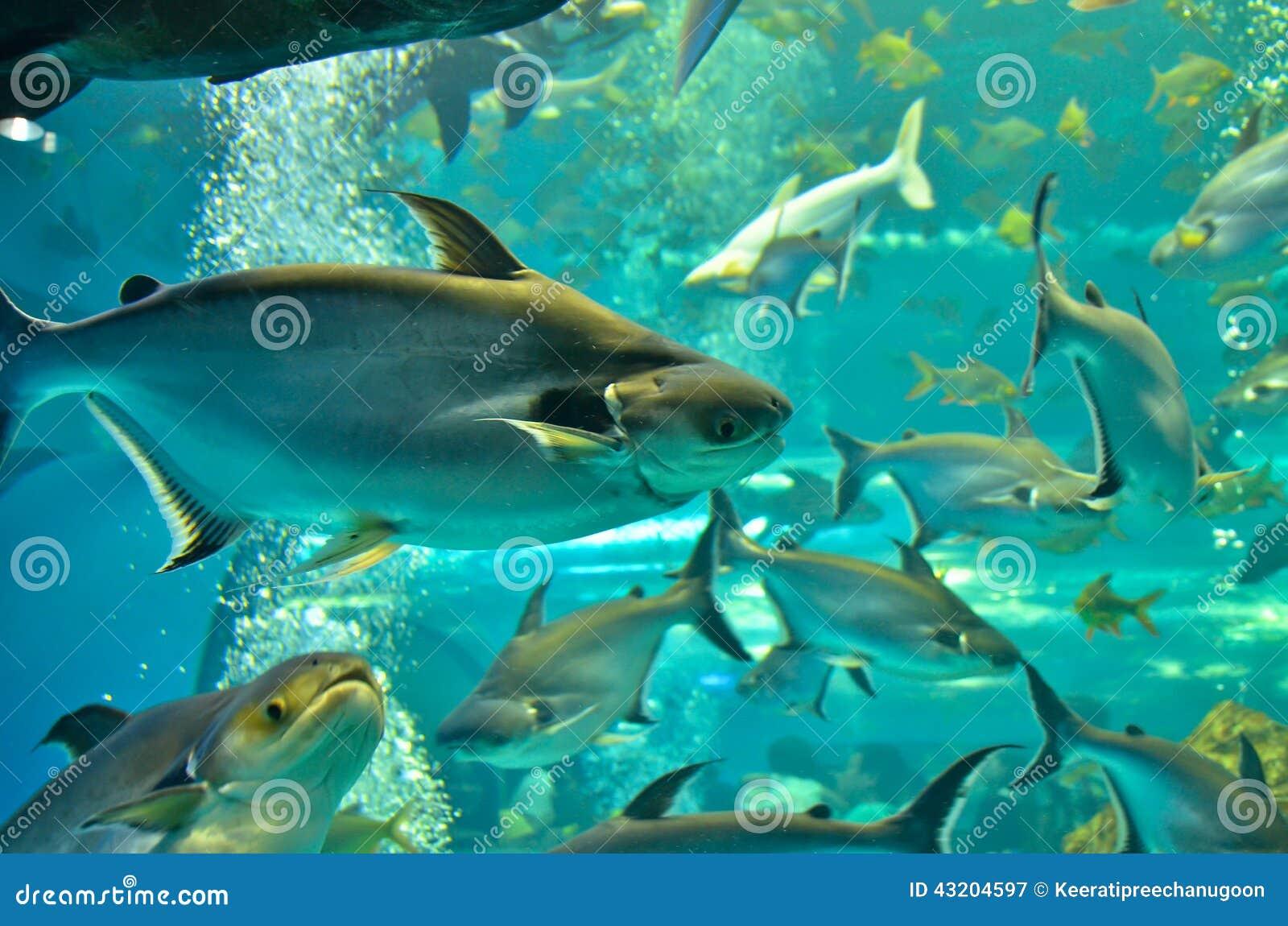 Download OCloseup Av Den Härliga Havsfisken Fotografering för Bildbyråer - Bild av fransman, klimat: 43204597