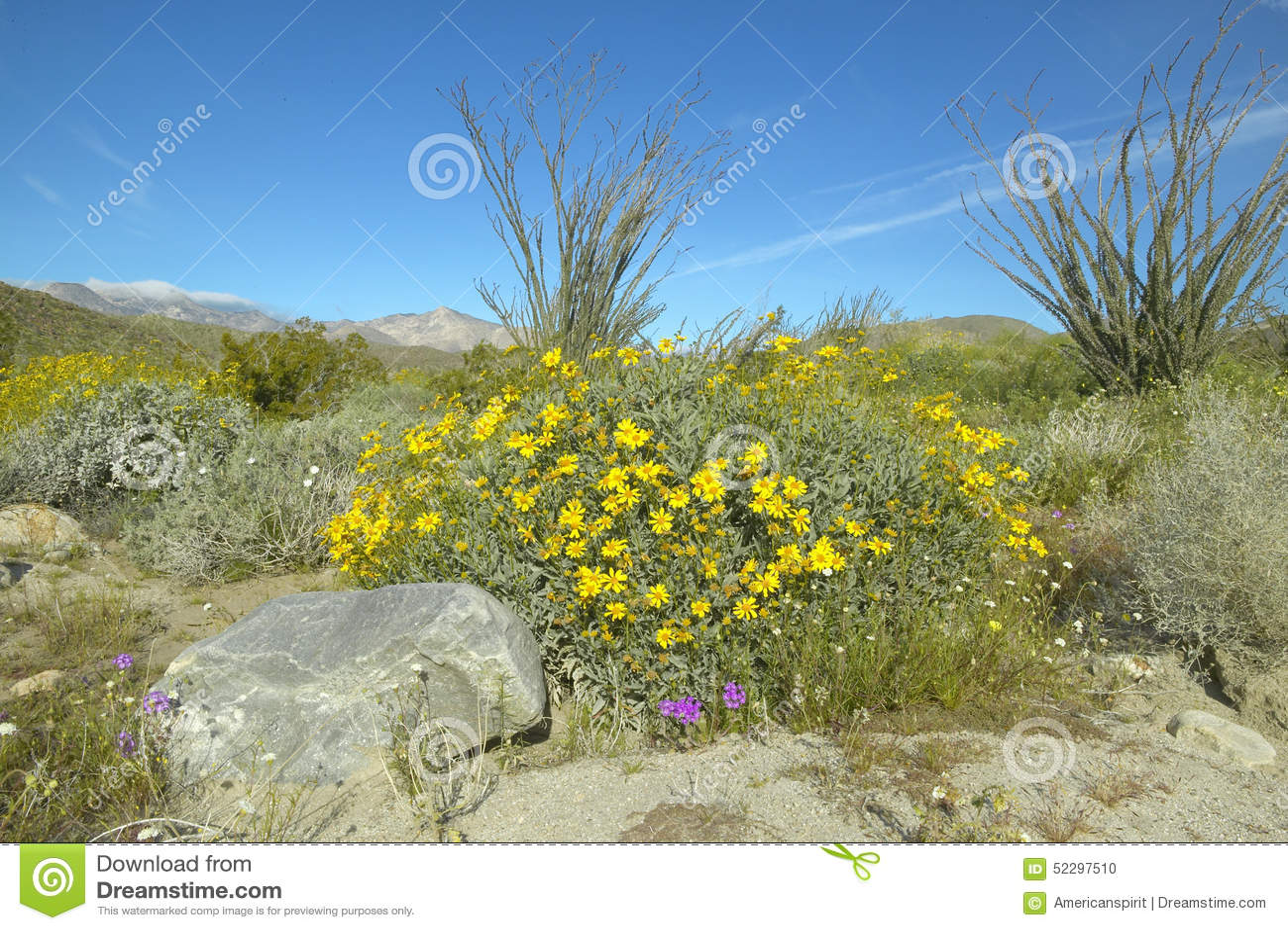 Ocotillo blossoms in springtime desert at Coyote Canyon, Anza-Borrego Desert State Park, near Anza Borrego Springs, CA