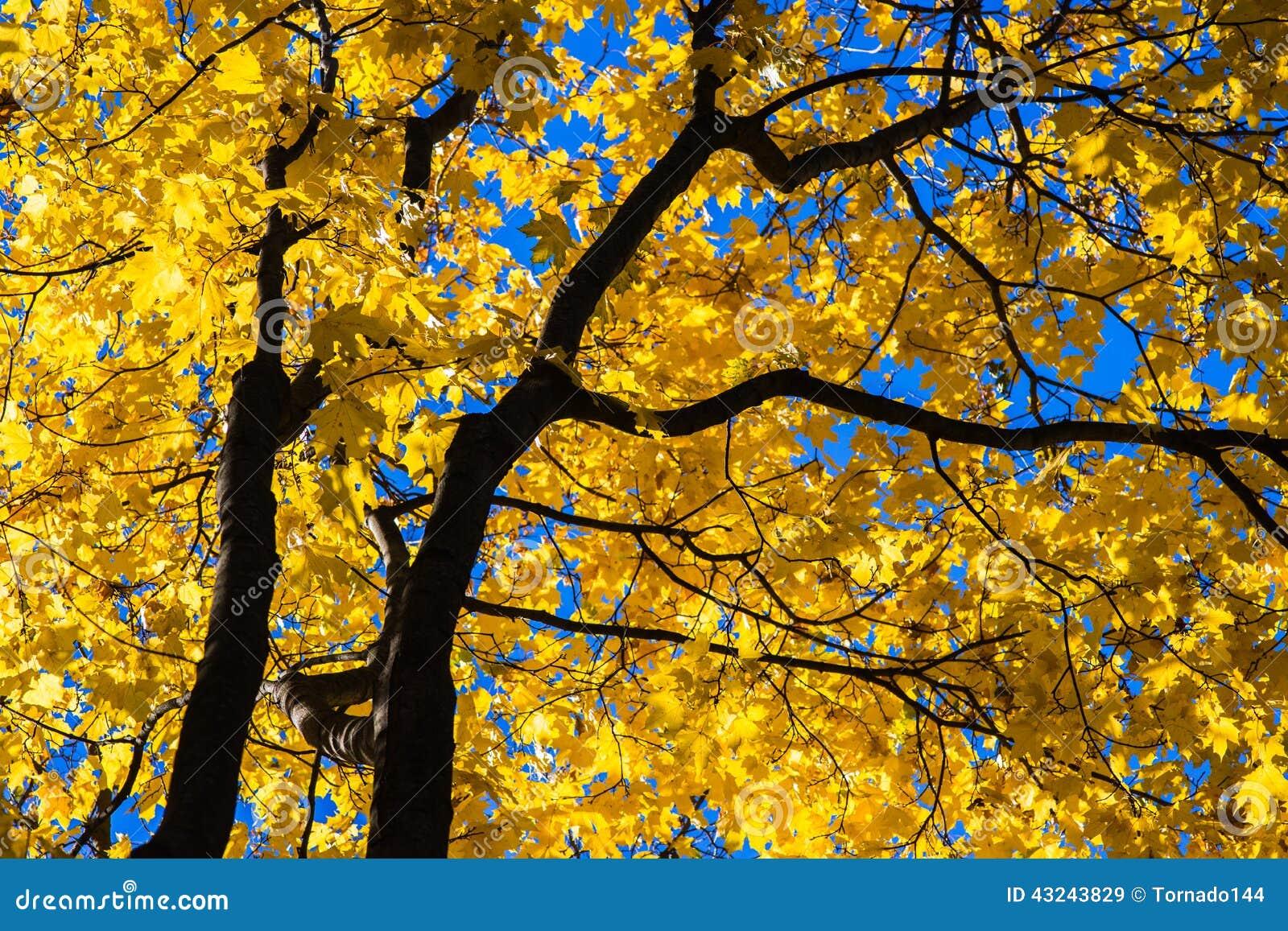 October Blues 7 Stock Image Image Of Foliage Environment