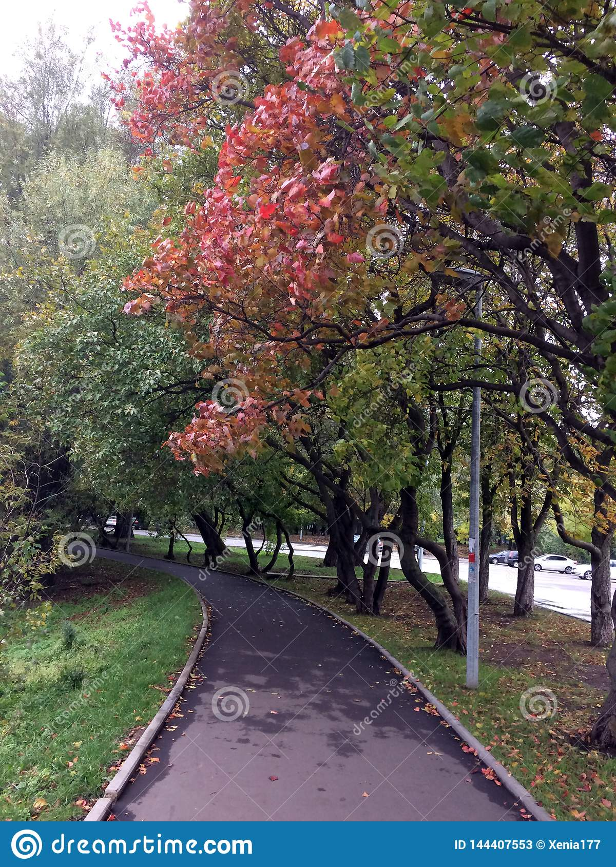 Autumn alley with red leaves