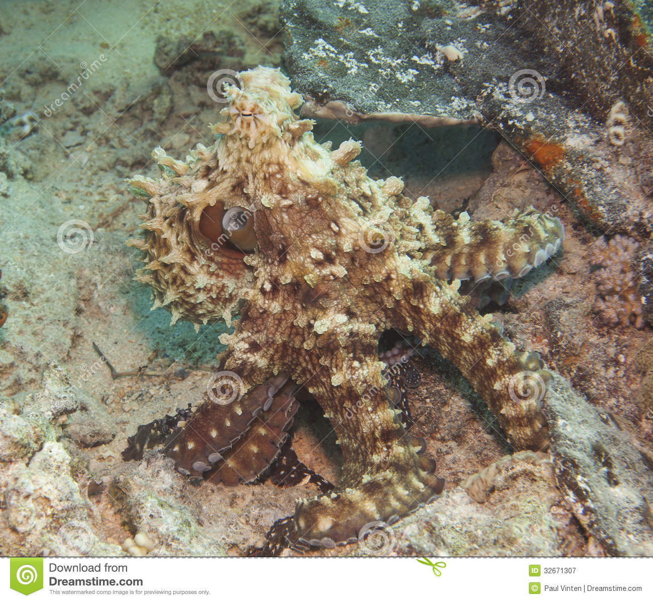 Octopus On A Coral Reef Royalty Free Stock Photography ...