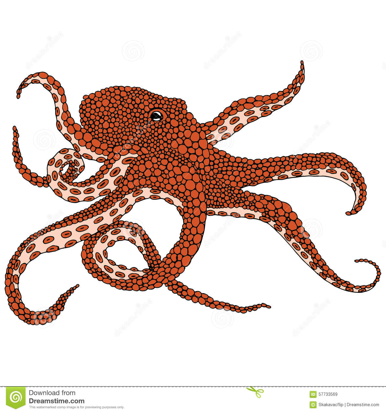 Octopus Illustration Octopus Vulgaris On White Background