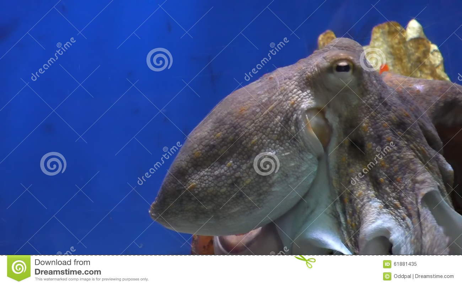 Fish in tank swimming at top - Fish In Tank Swimming At Top