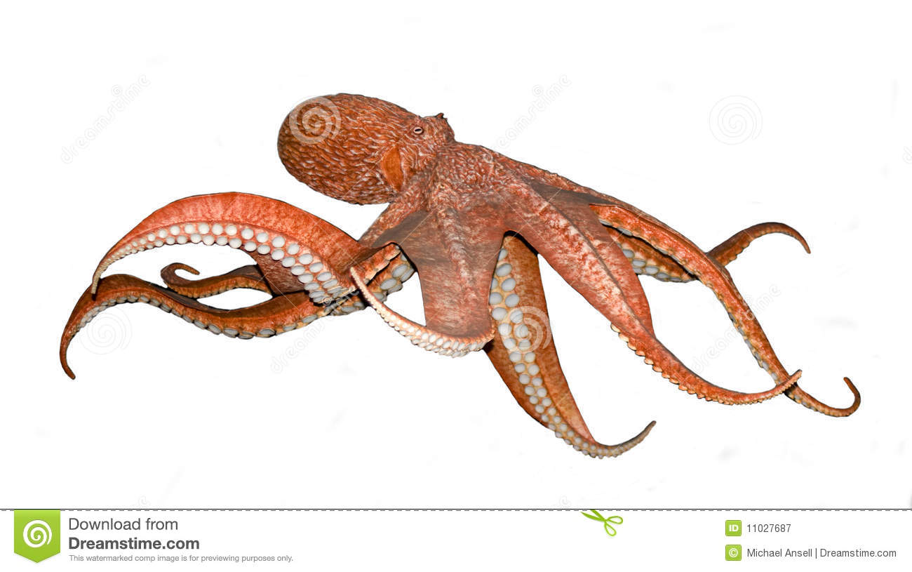 Octopus On White Royalty Free Stock Photography - Image: 11027687