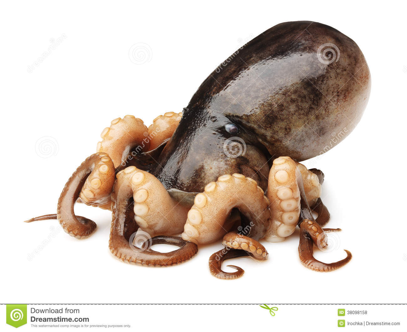 Octopus On White Background Royalty Free Stock Photos