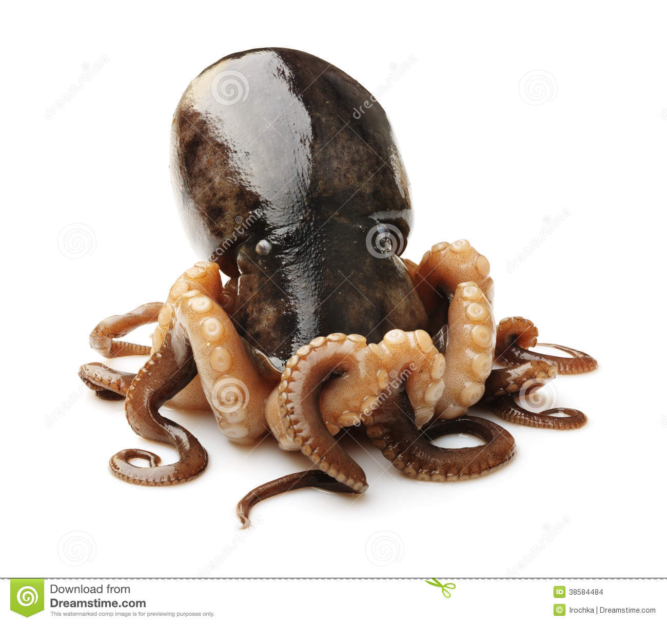Octopus On White Background Stock Images - Image: 38584484
