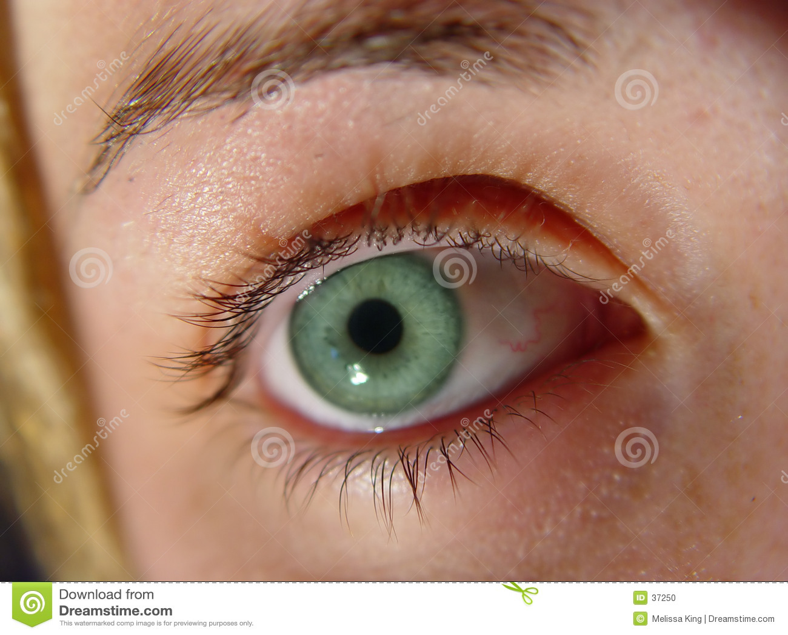 Oczy zielone zbliżenia