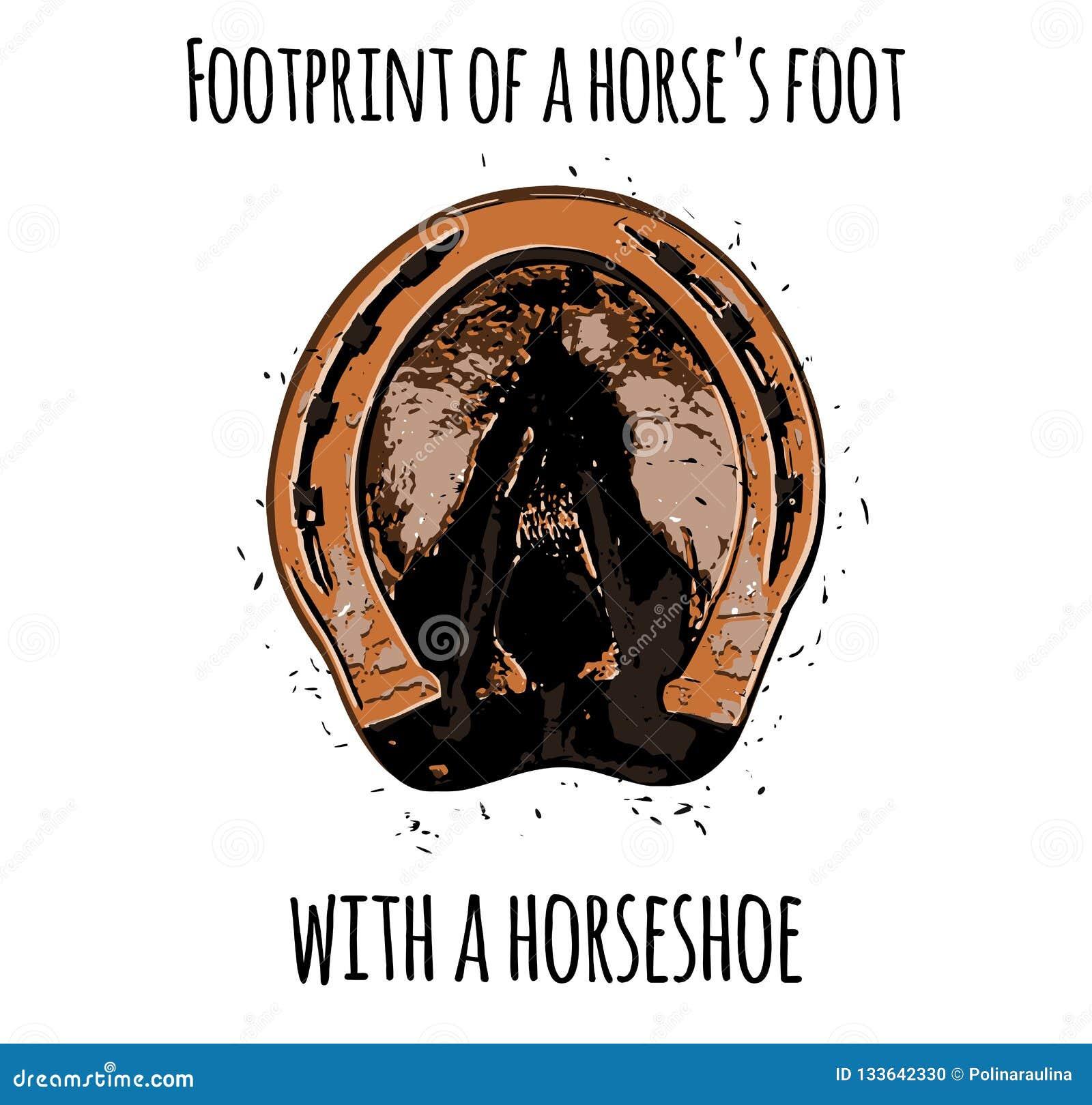 Odcisk stopy konia stopa z podkową