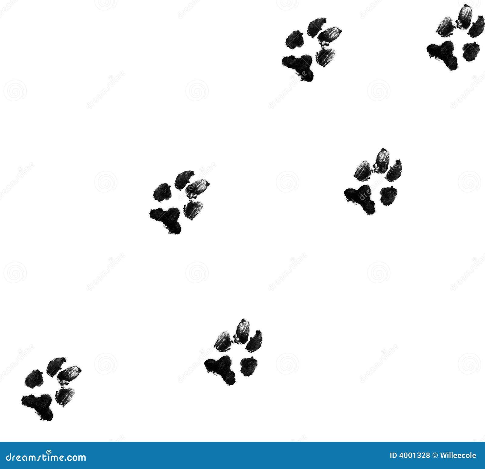Odciski łap psa
