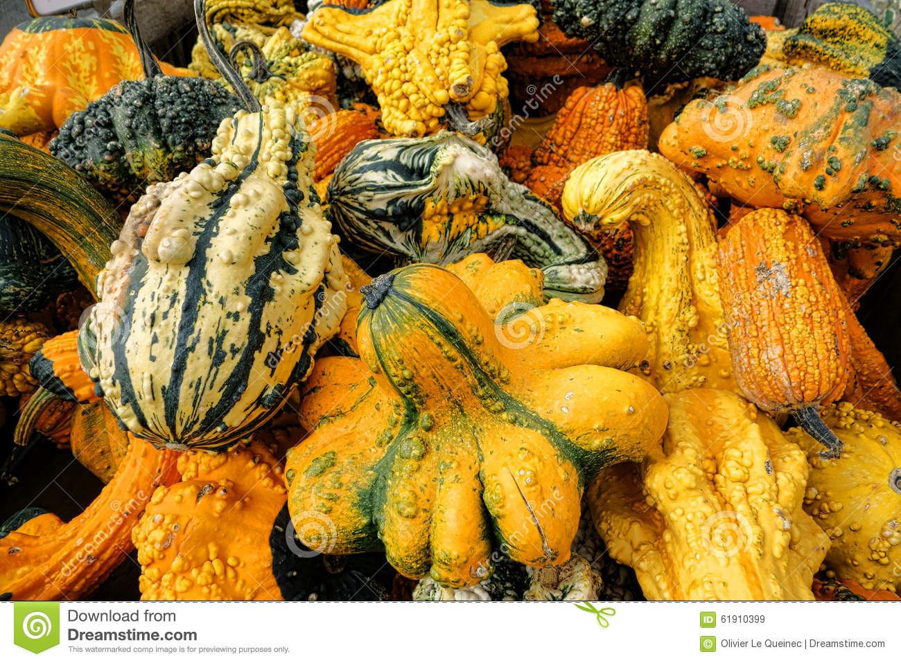 Odd Gourds For Halloween Stock Image Image Of Decoration 61910399