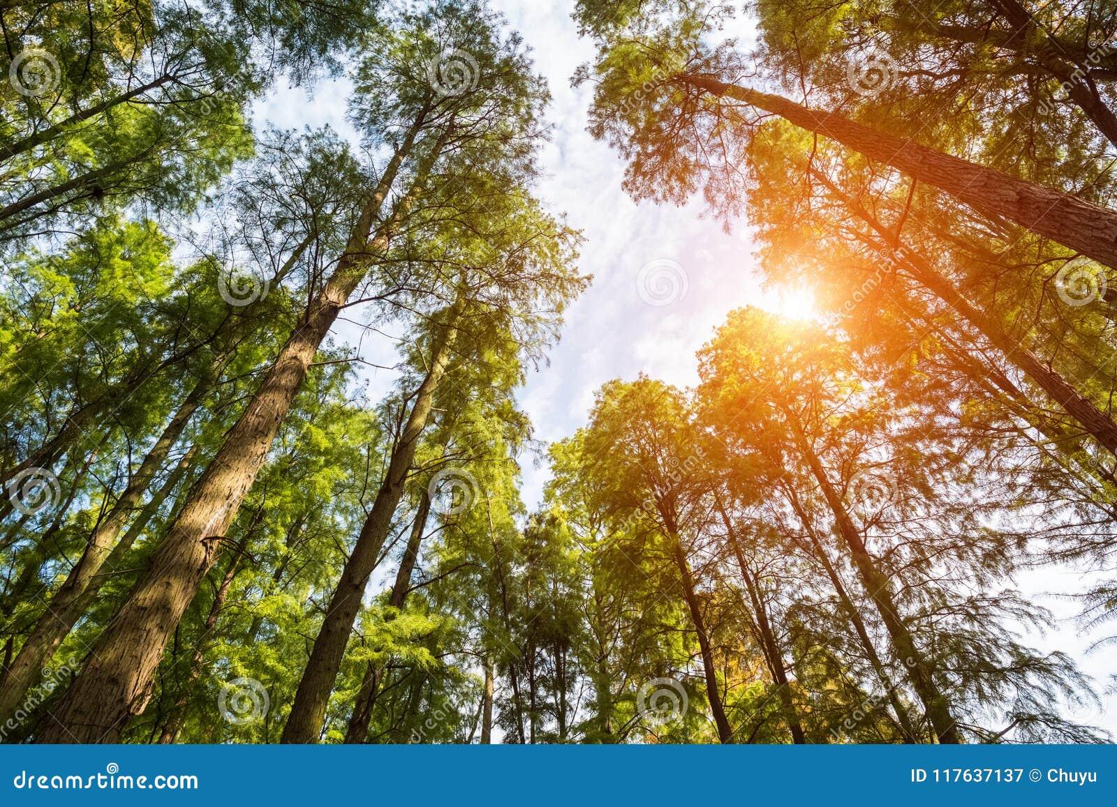 Oddolny widok drewna