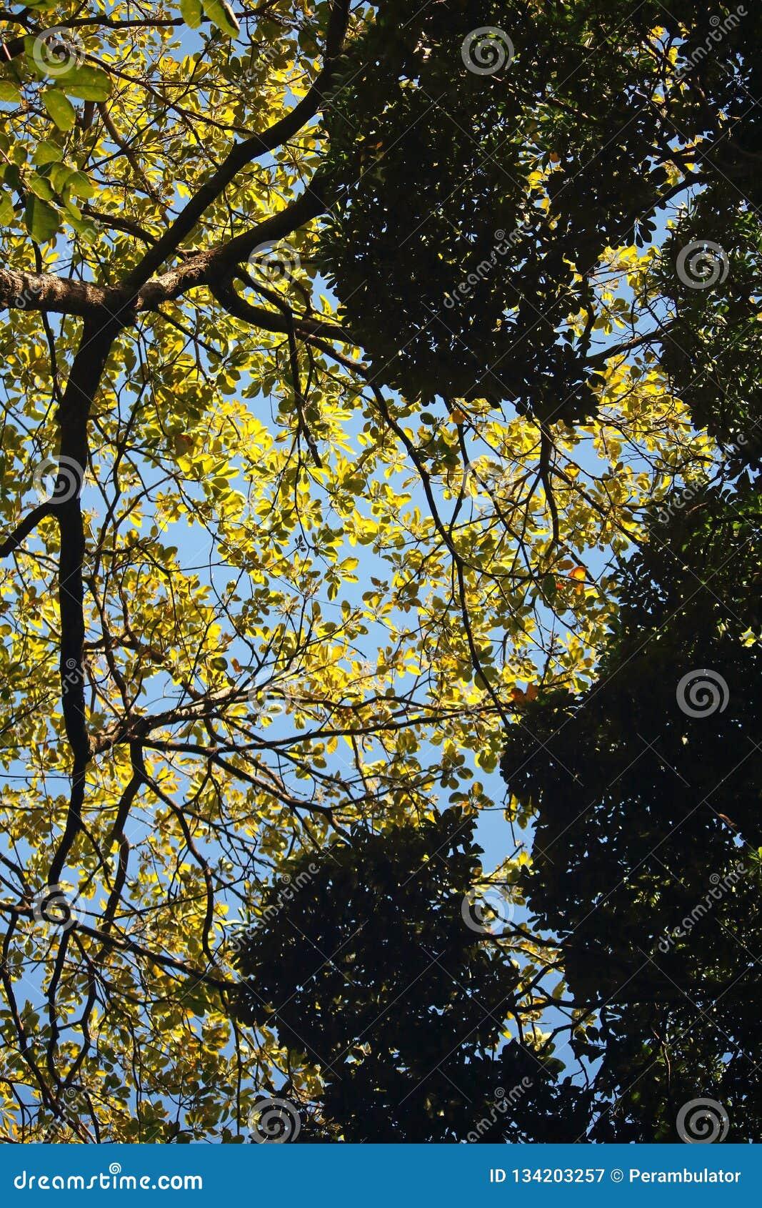 ODDOLNY widok JASKRAWY - zieleń OPUSZCZA NA gałąź Z światłem słonecznym DALEJ Z CIEMNOZIELONYM ulistnieniem W przedpolu