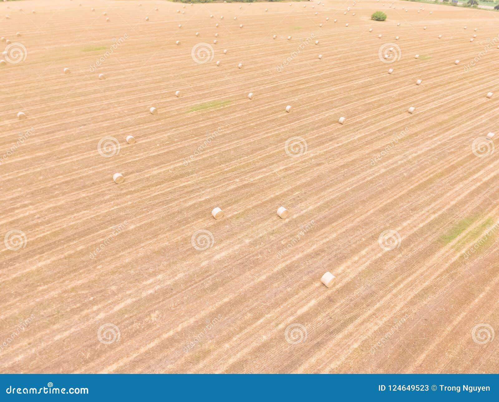 Odgórnego widoku beli siano na kukurudzy uprawiają ziemię po żniwa w Austin, Teksas,