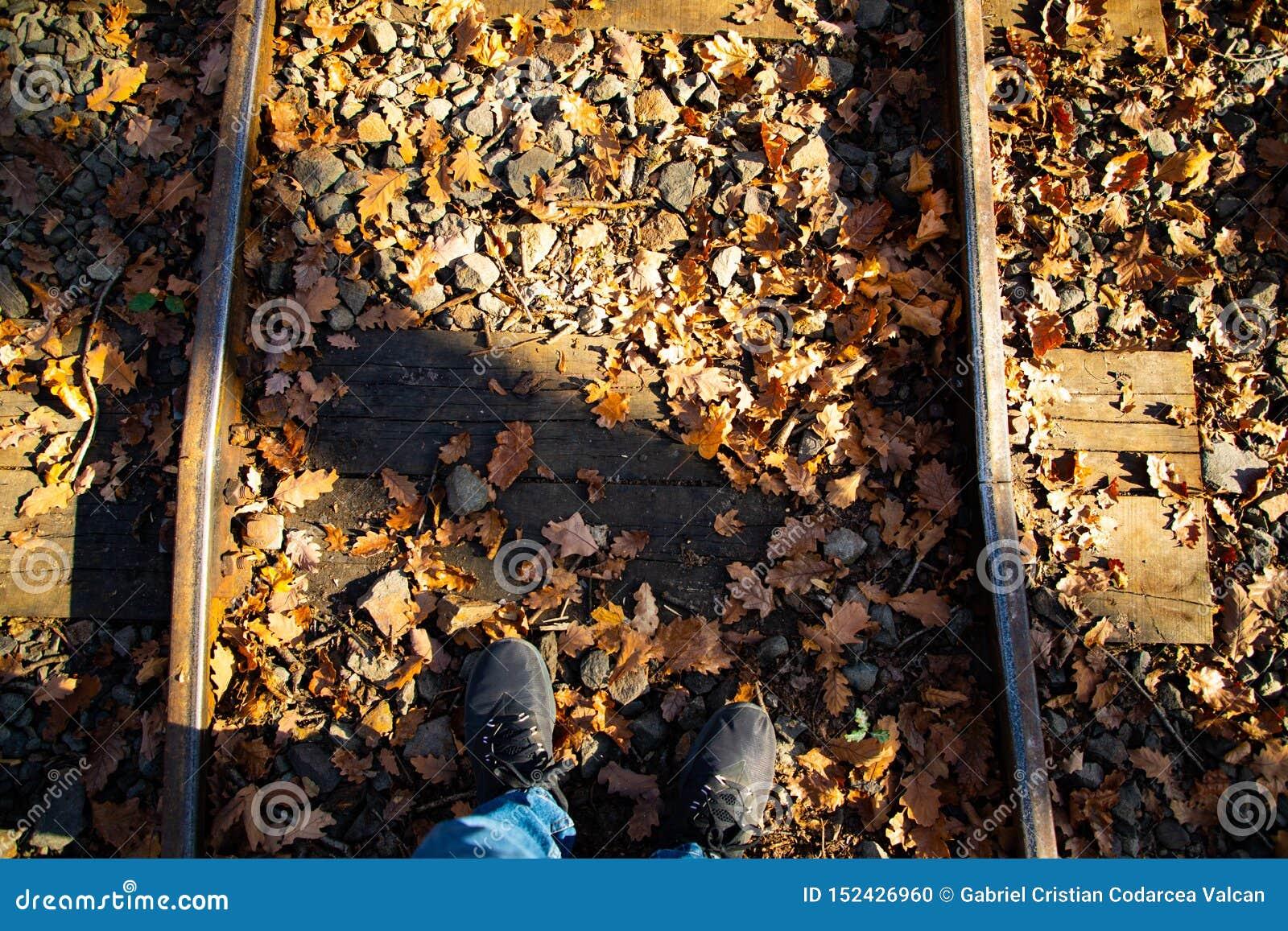 Odgórny strzał cieki na kolei na spadku z suchymi liśćmi podczas zmierzchu