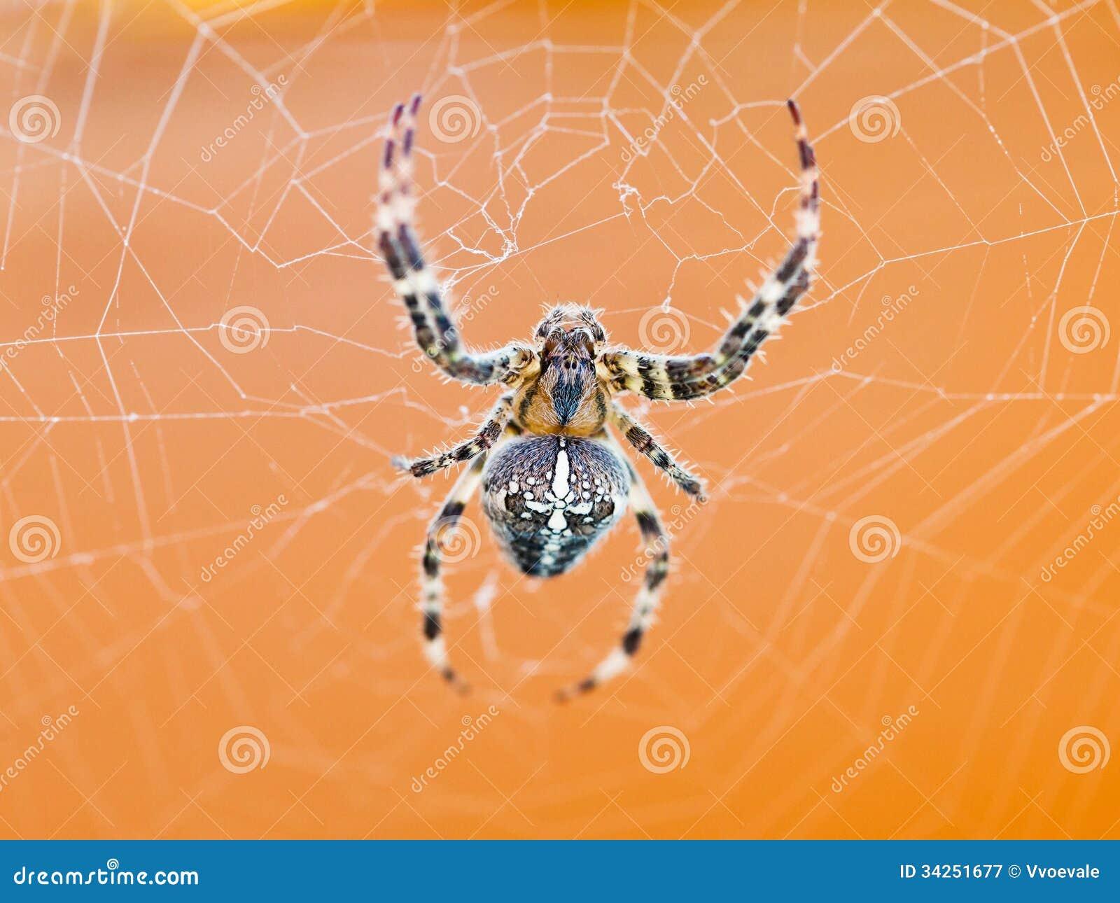 Odgórny widok pająk przy pajęczyną