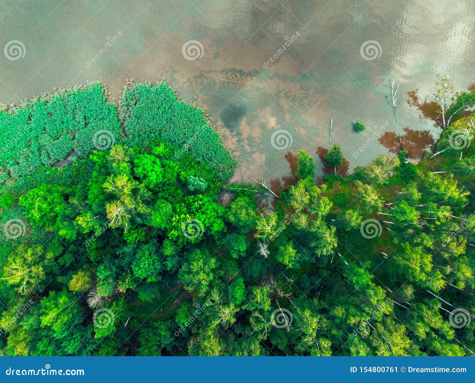 Odgórny widok zieleń las i brzeg rzeki