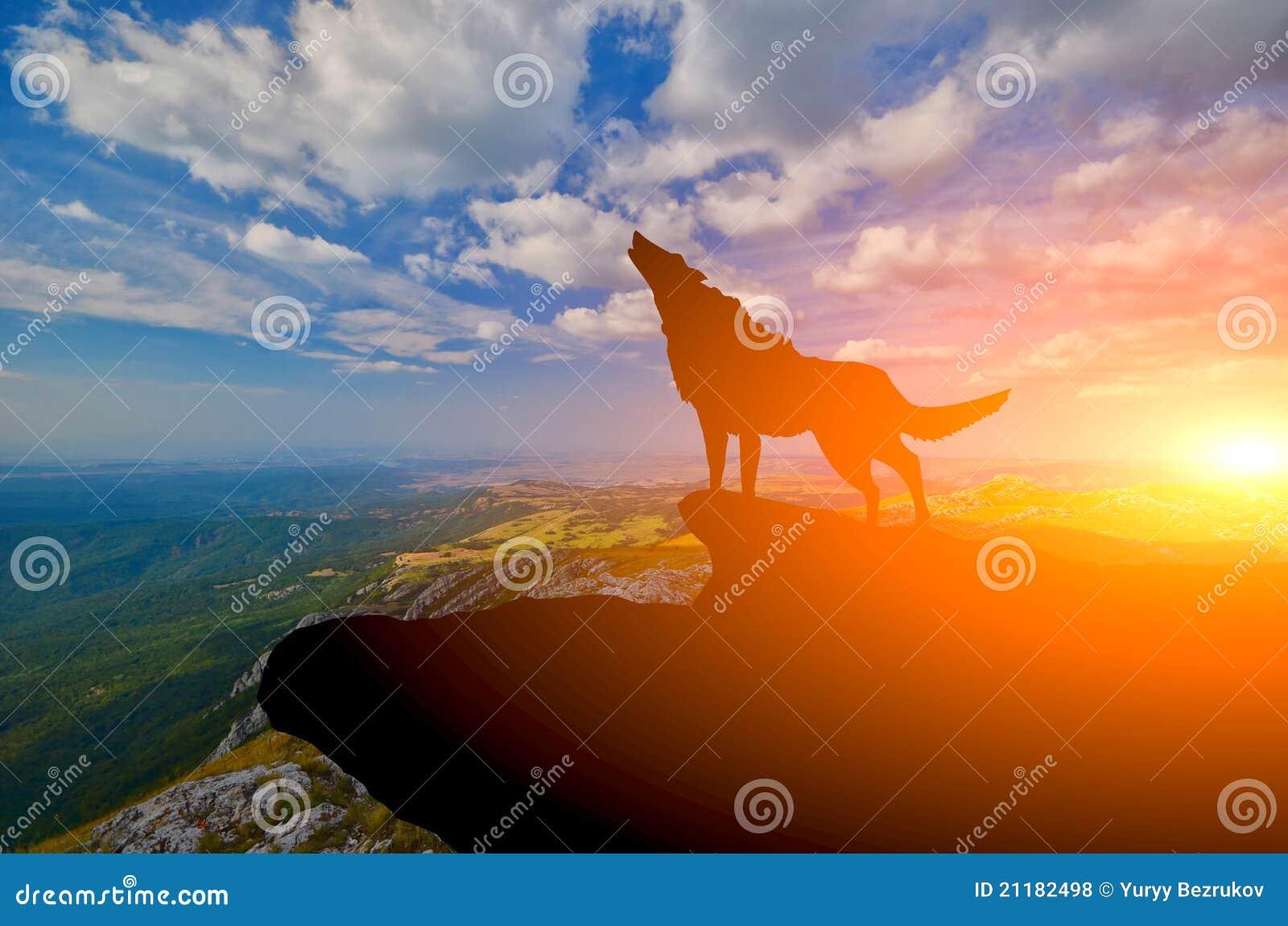 Odgórny wolve
