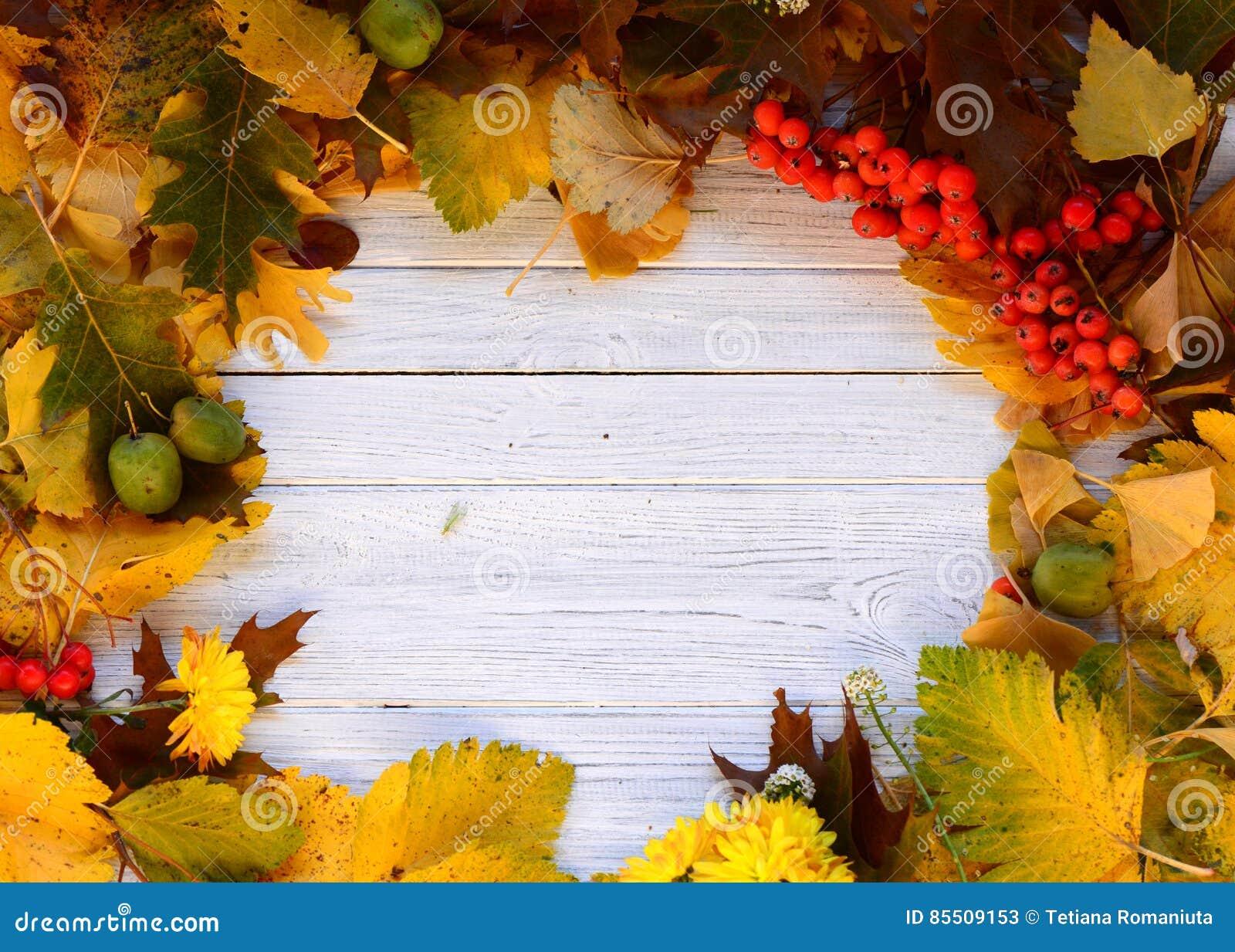Odizolowywająca piękna jesień rama opuszczać istnego biel