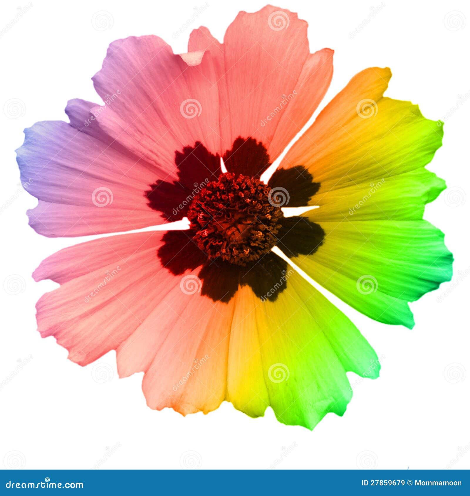 Odizolowywający na Biel pojedynczy Żółty Kwiat