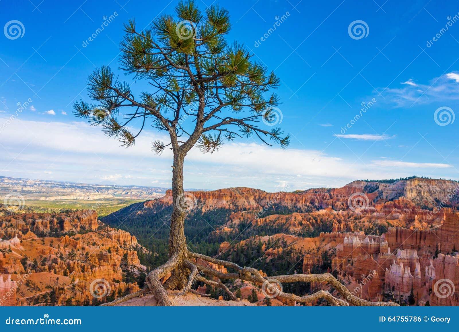 Odludny drzewo w Bryka jaru parku narodowym, Utah