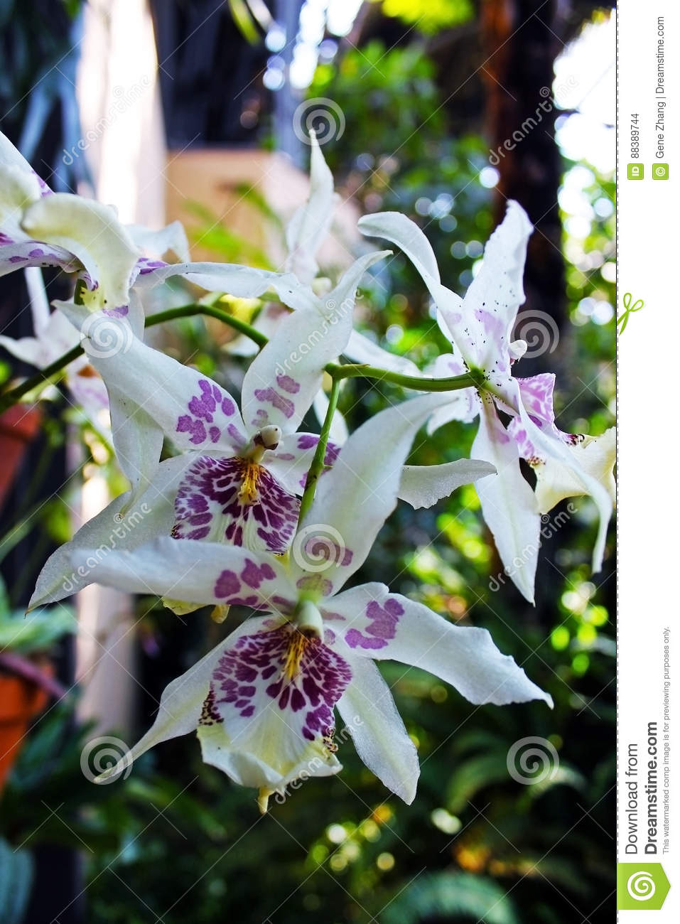 white spotted orchid flower - photo #16